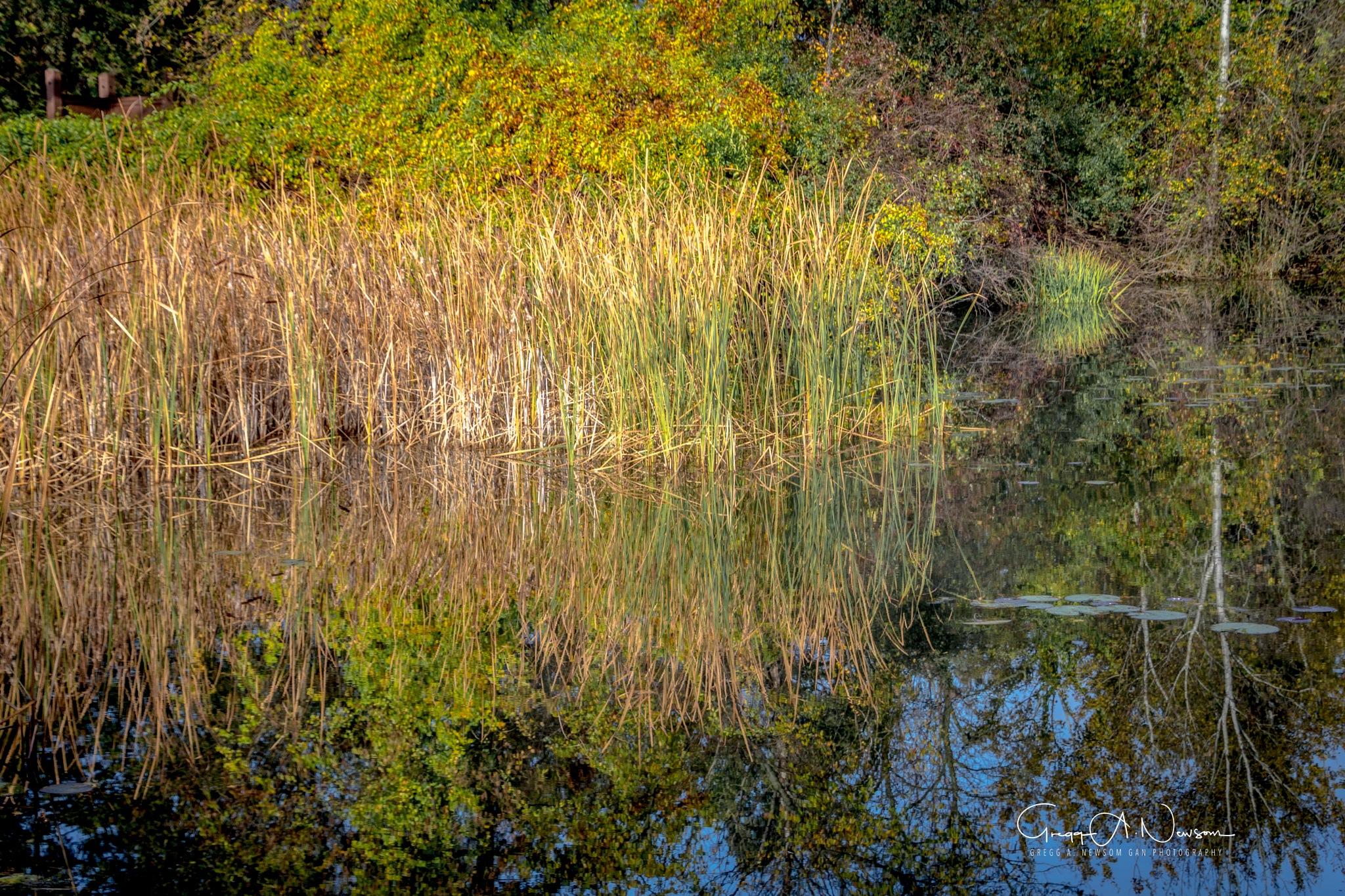 Reflections 6 by Gnewsom324
