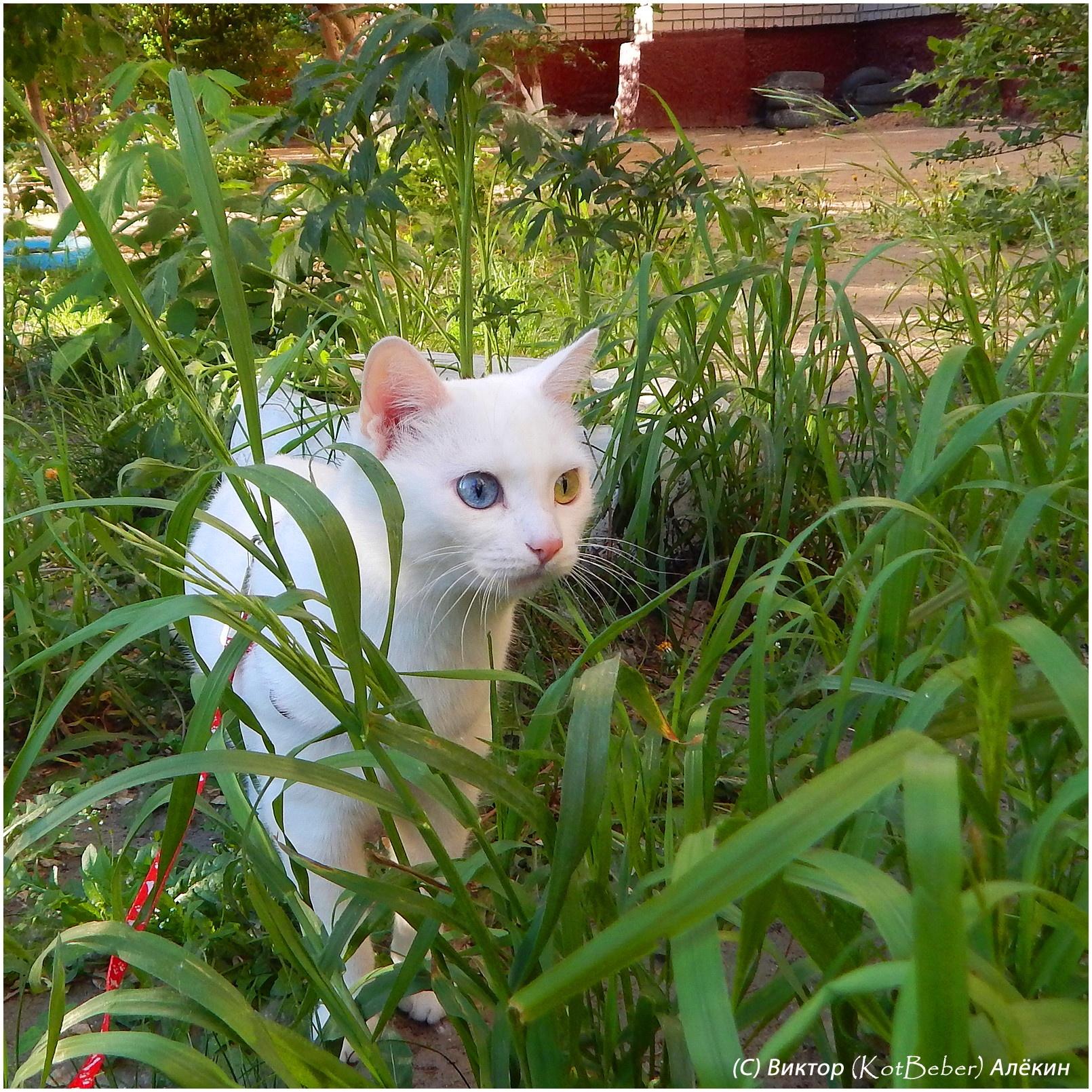 Photo in Animal #белоснежка #cats #кошки