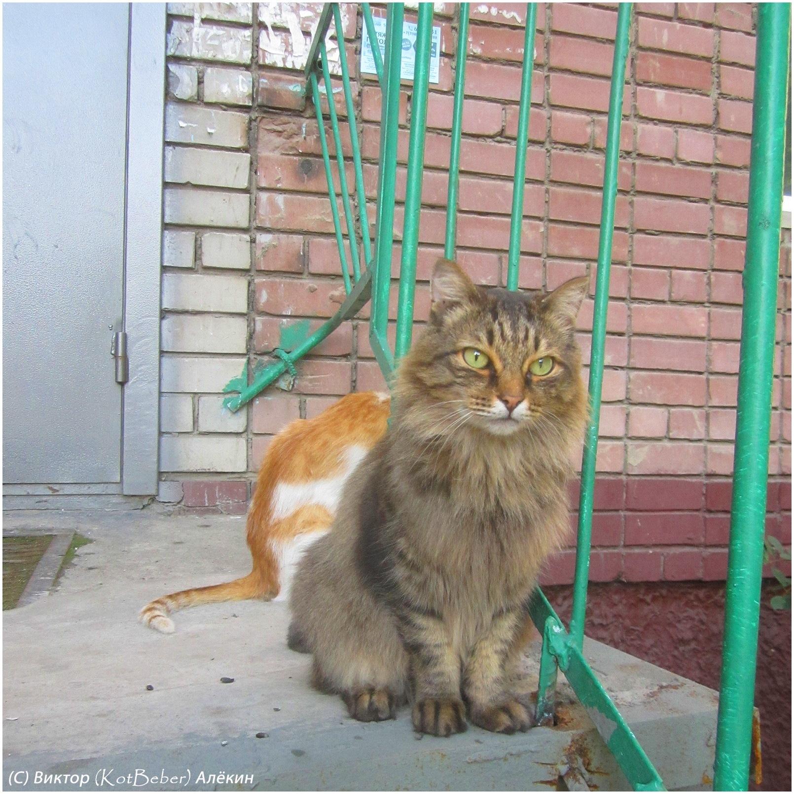 Городские коты by kotbeber