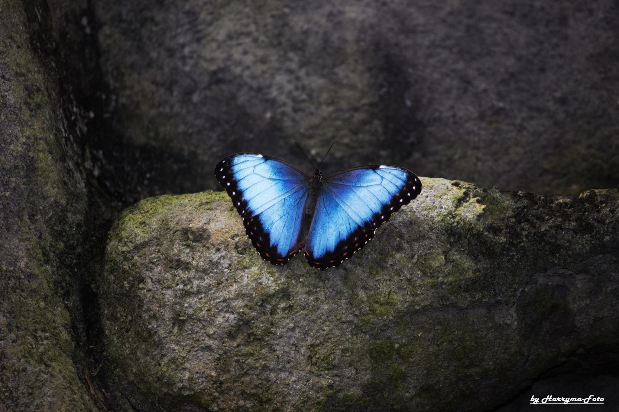 Schmetterling by haraldkleiner