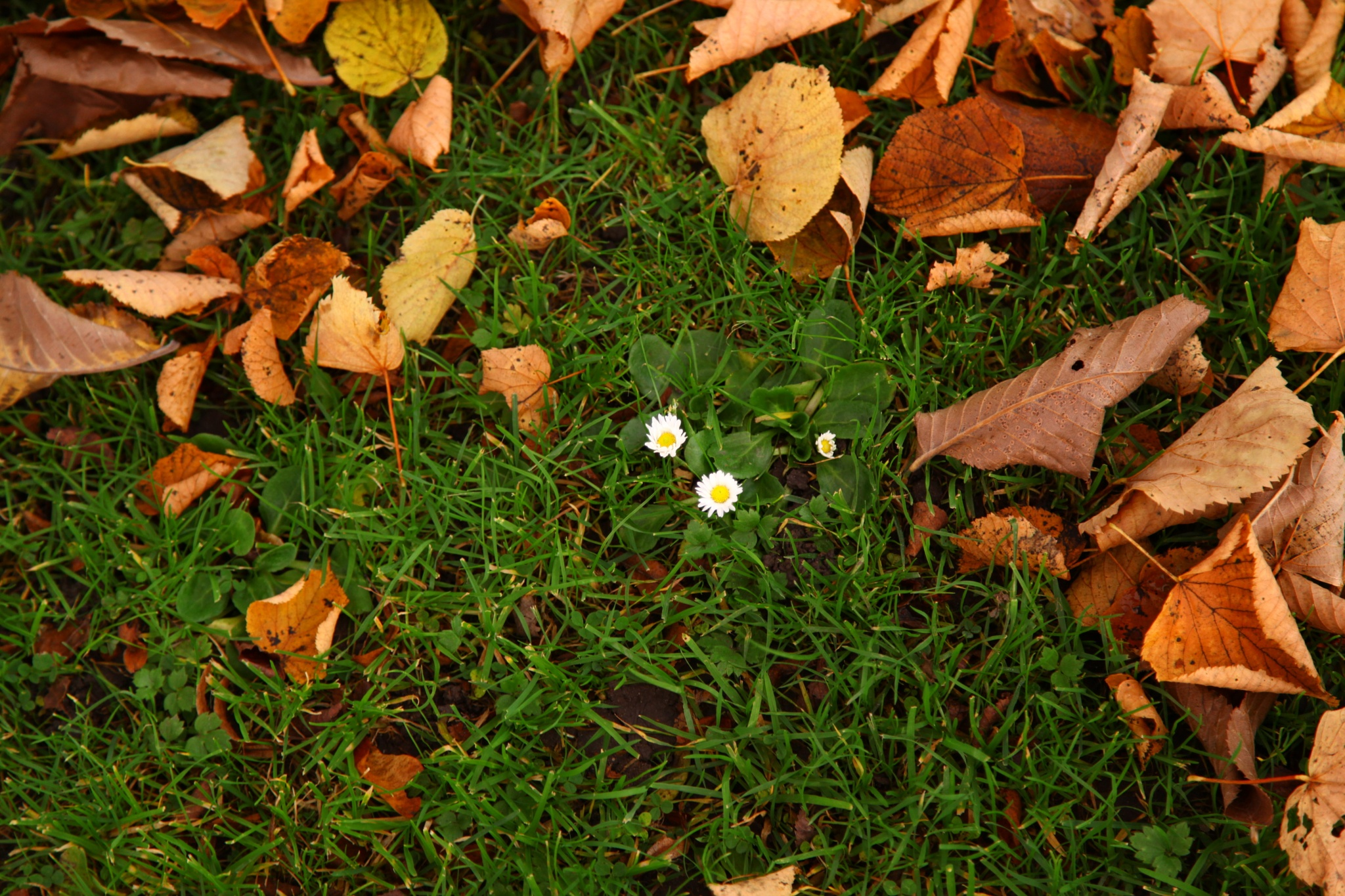 flower among leaves  by Andreas Larsson