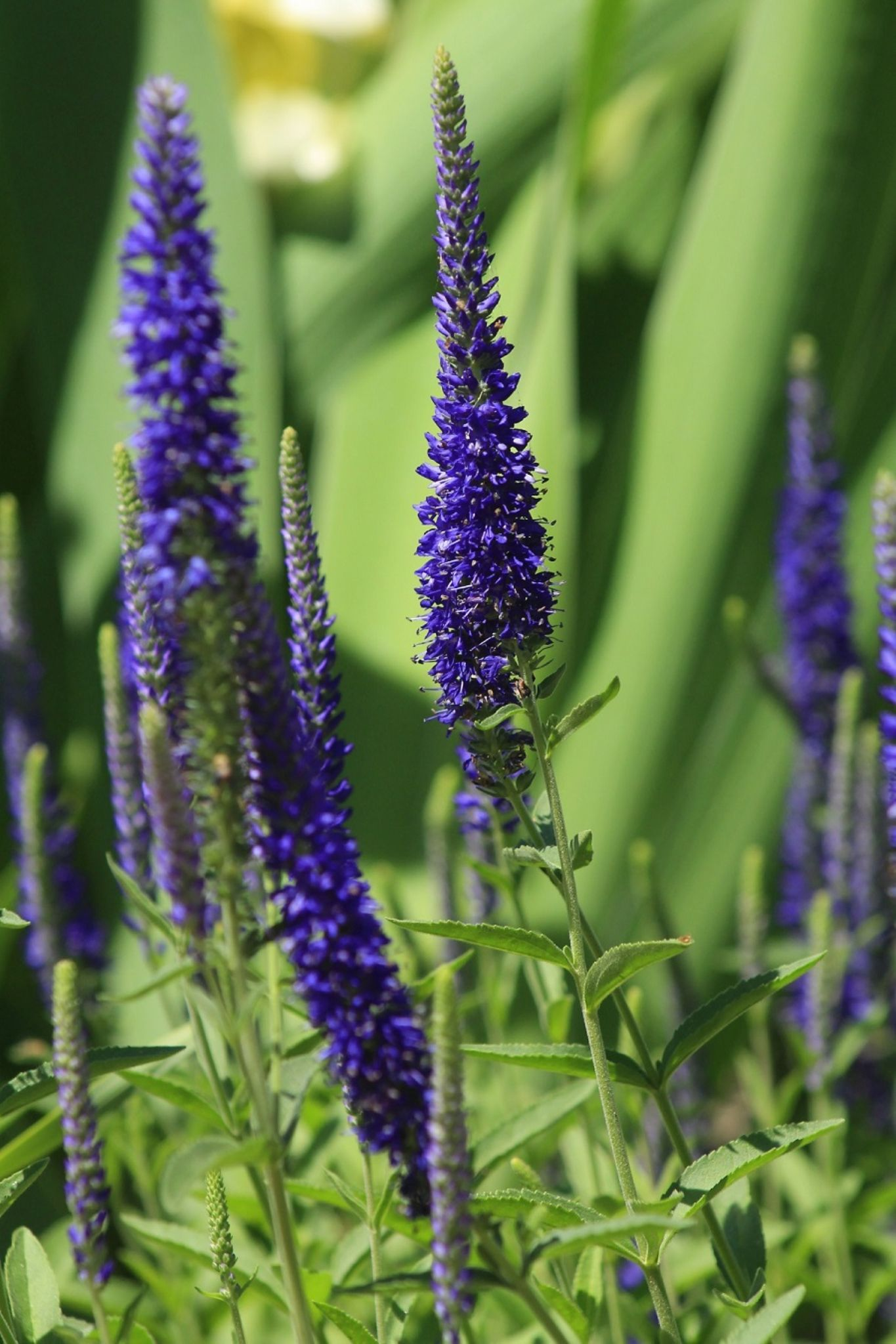 Blue beauty by heathercartermartin