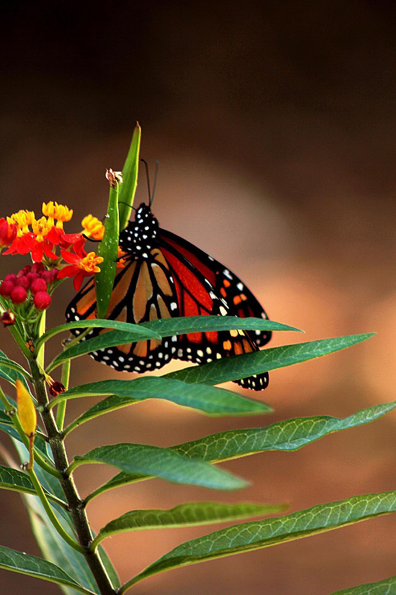 Photo in Nature #inscet #nature #flower