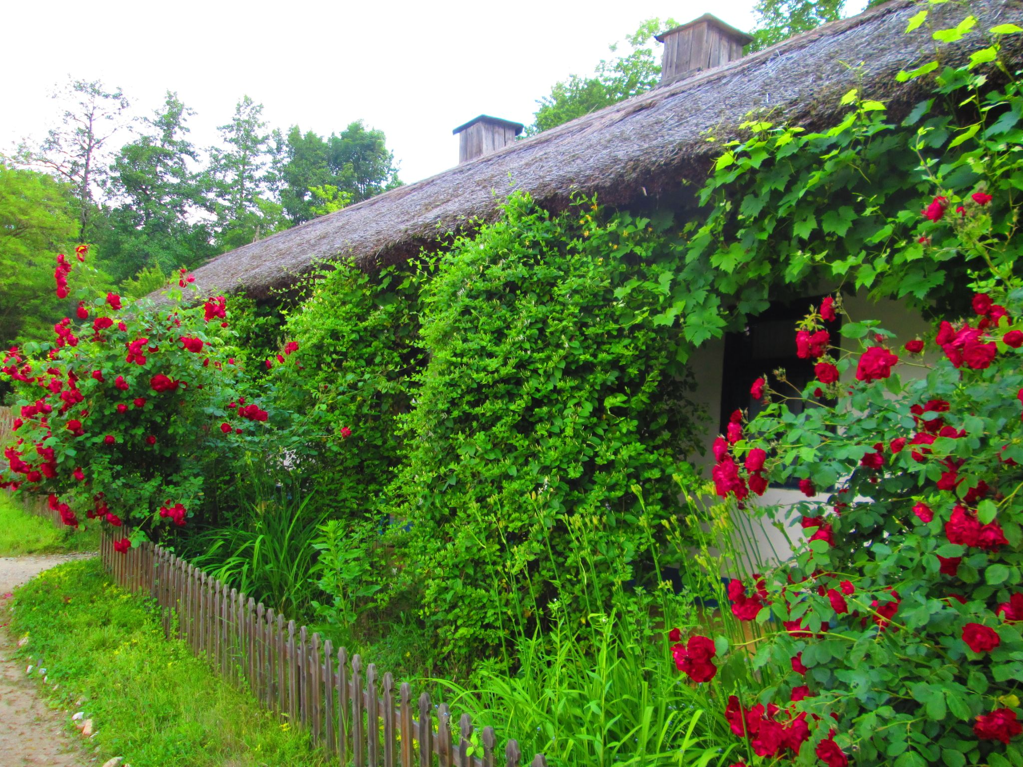 roses  by Gratiela