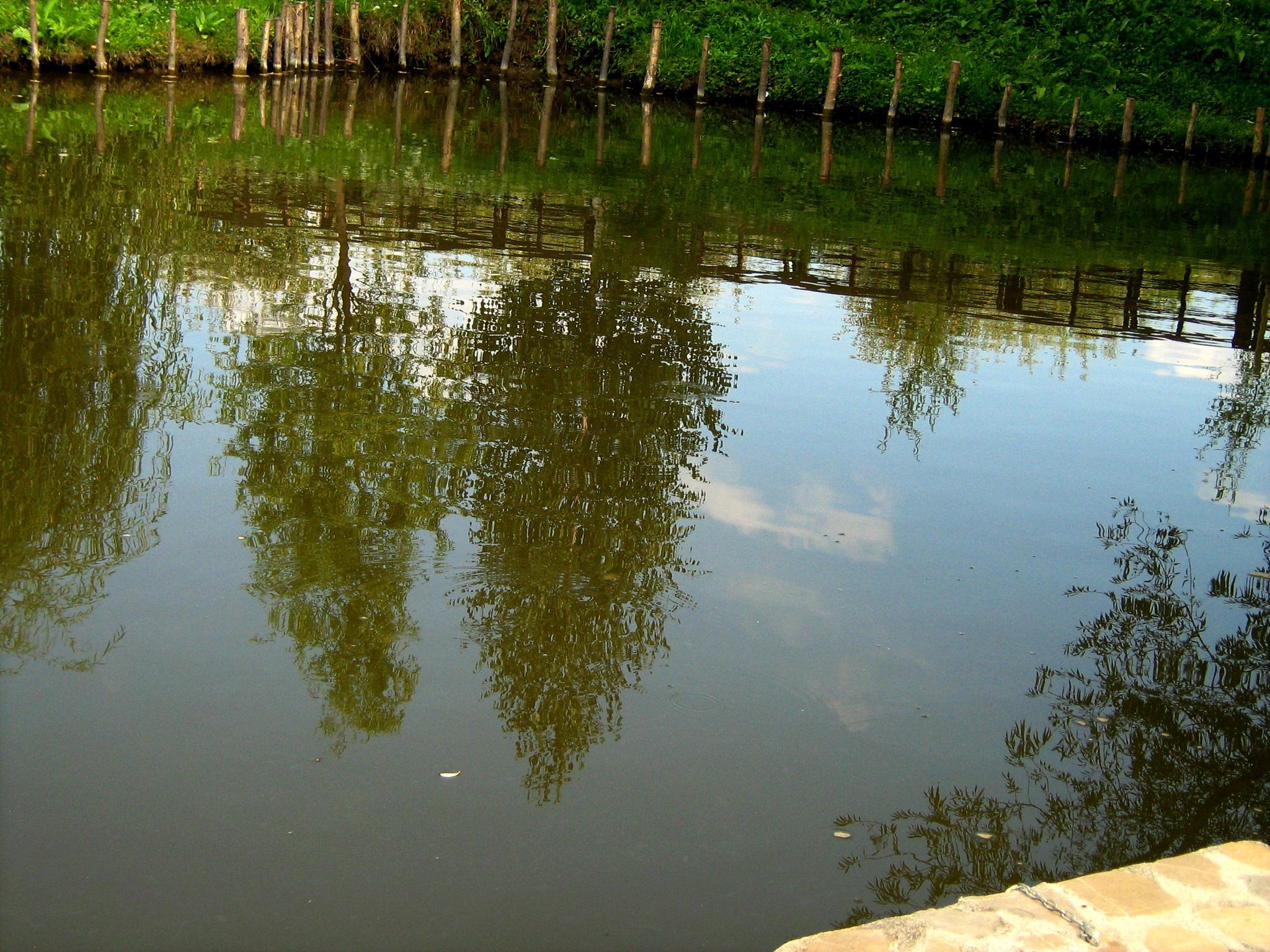 In the water  by Gratiela