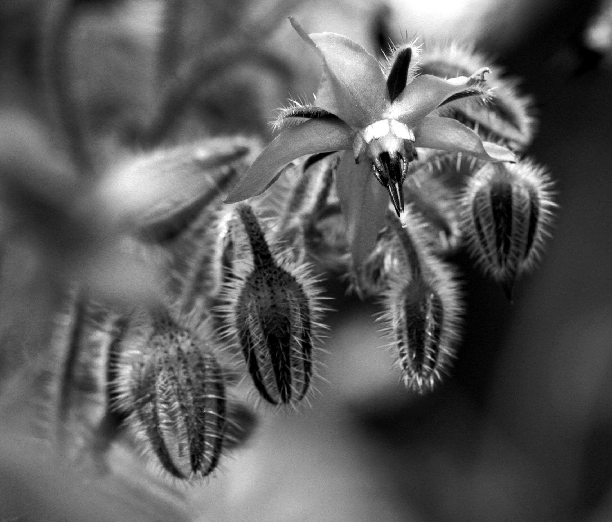 black and white by Gratiela