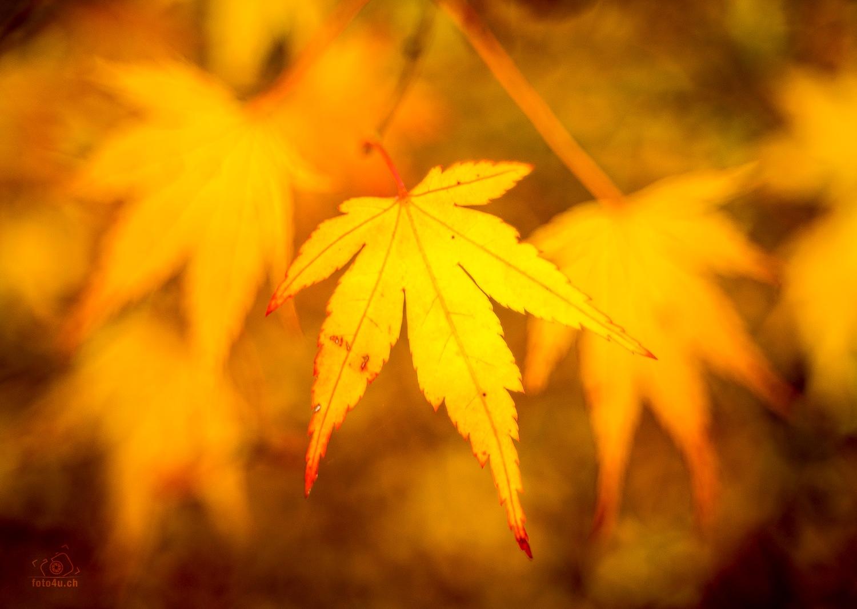 Herbstlaub by foto4uch