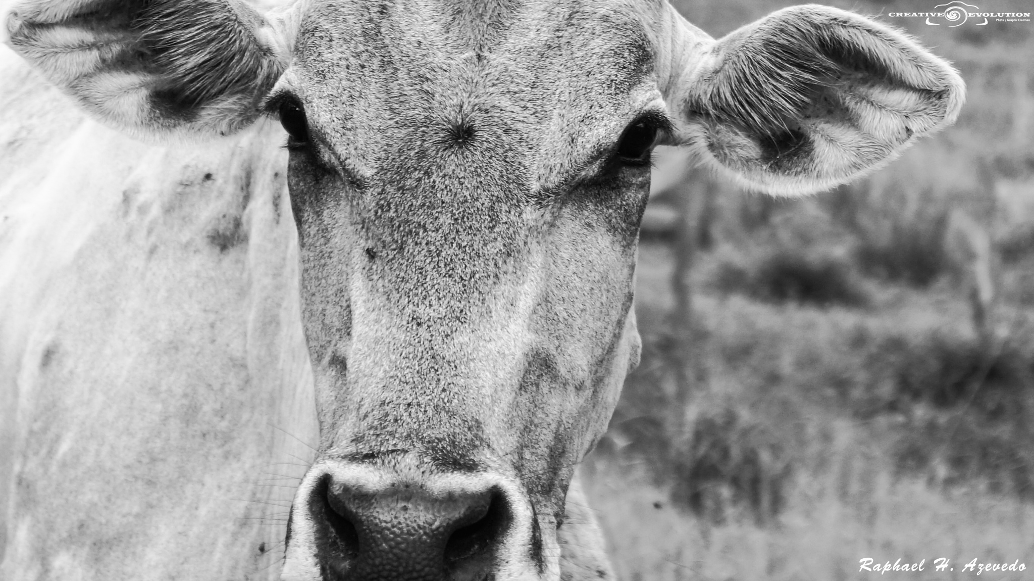 Photo in Black and White #black and white #animal