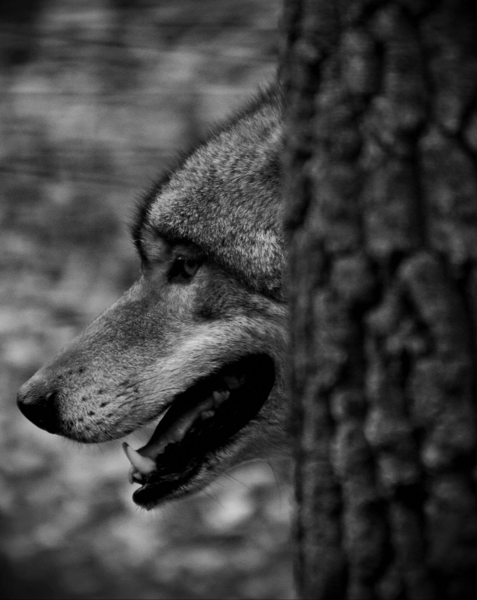 Funny hunter by RichardBorsik