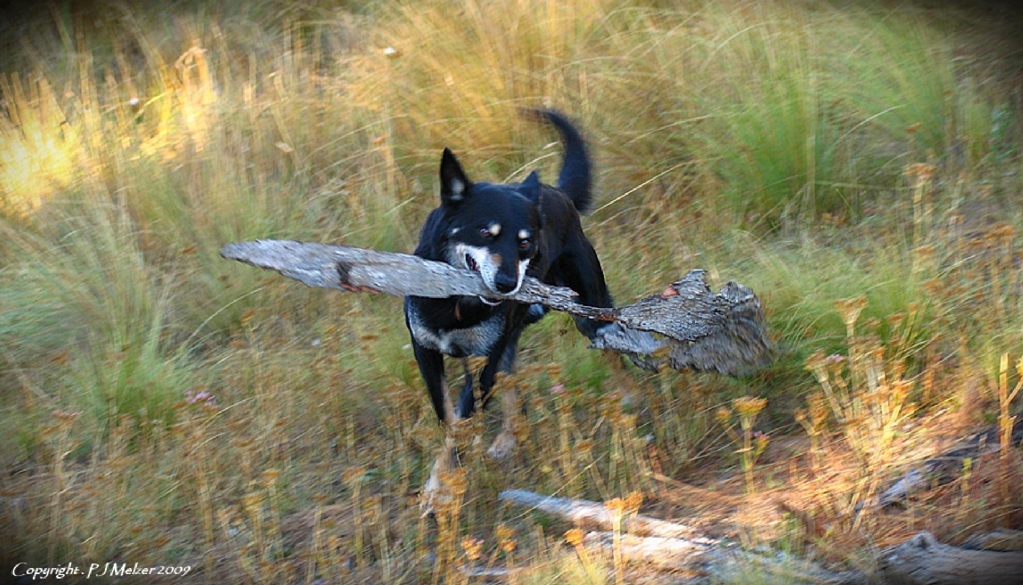 Max Likes Sticks by Maxiboy571