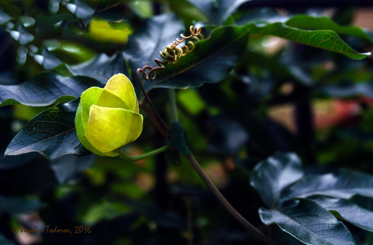 Beauty of flower_2 by Venelin Todorov