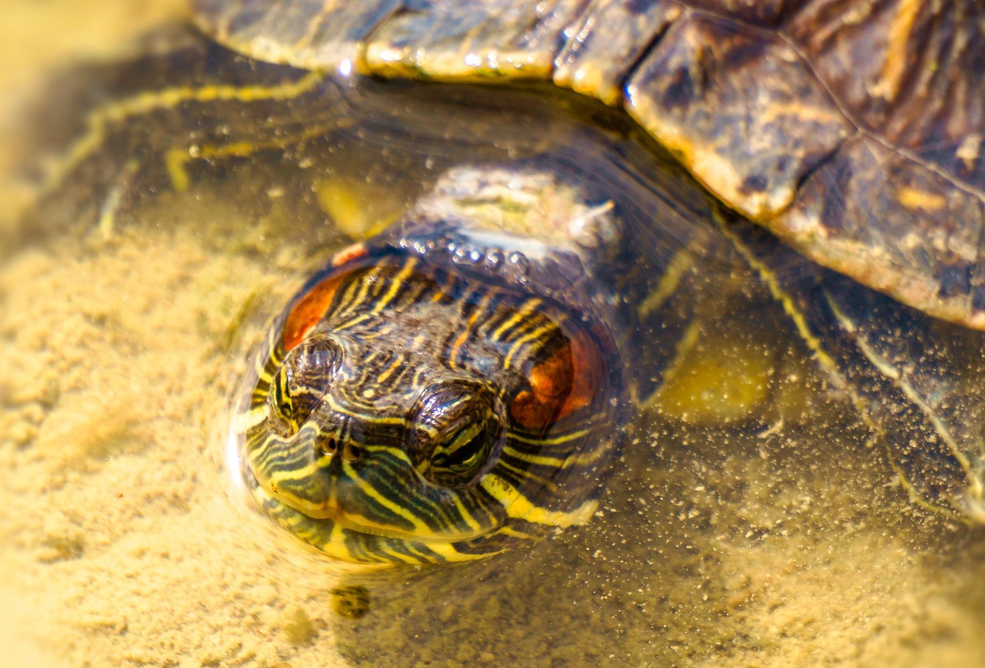 Turtle 6 by Venelin Todorov