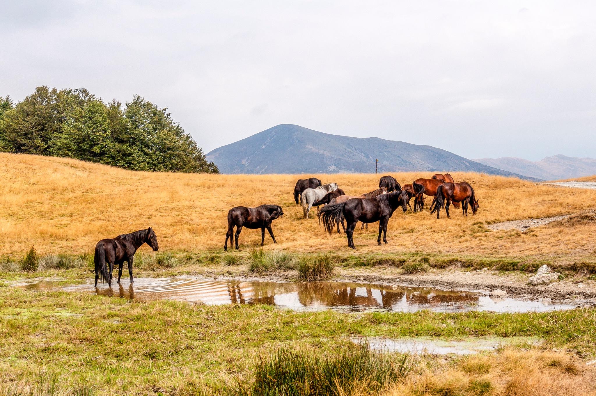 Wild horses on water  by Venelin Todorov