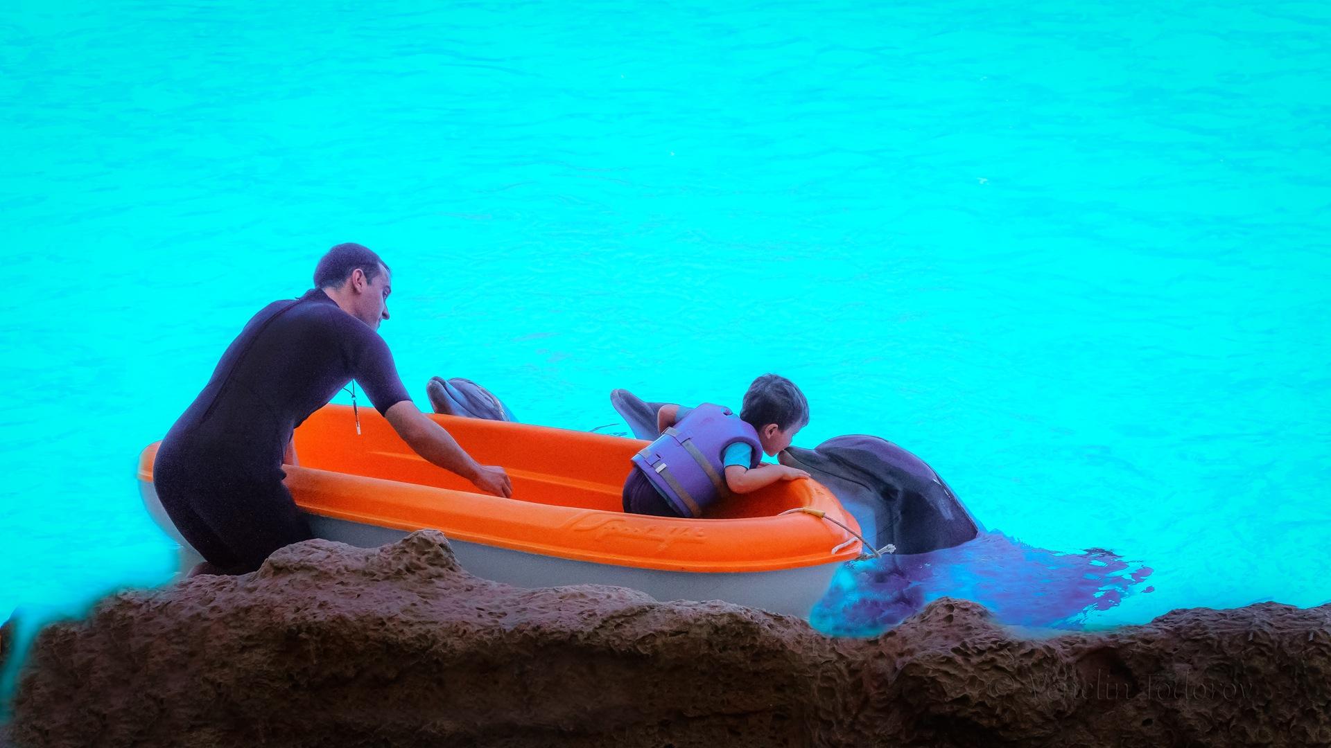 Kissing dolphine by Venelin Todorov