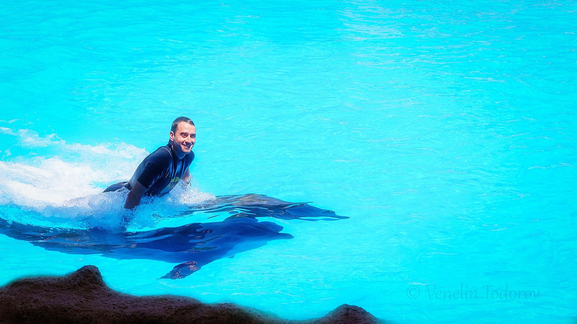 Riding dolphins by Venelin Todorov