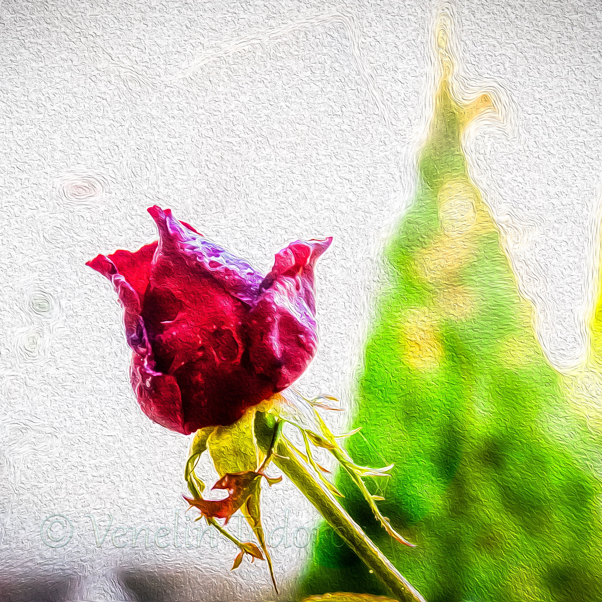 Rose- Paint oil by Venelin Todorov