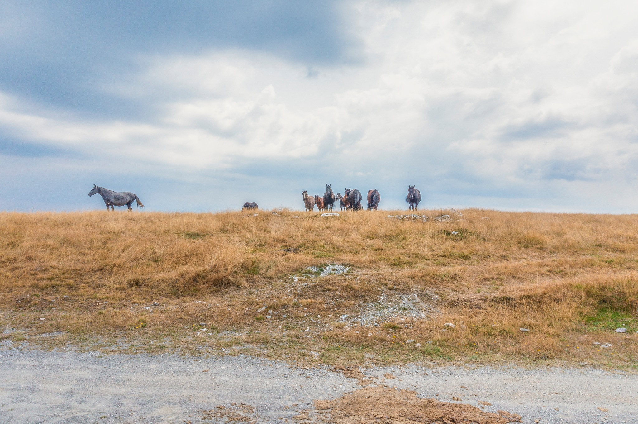 Wild horses on the top of mountain  by Venelin Todorov