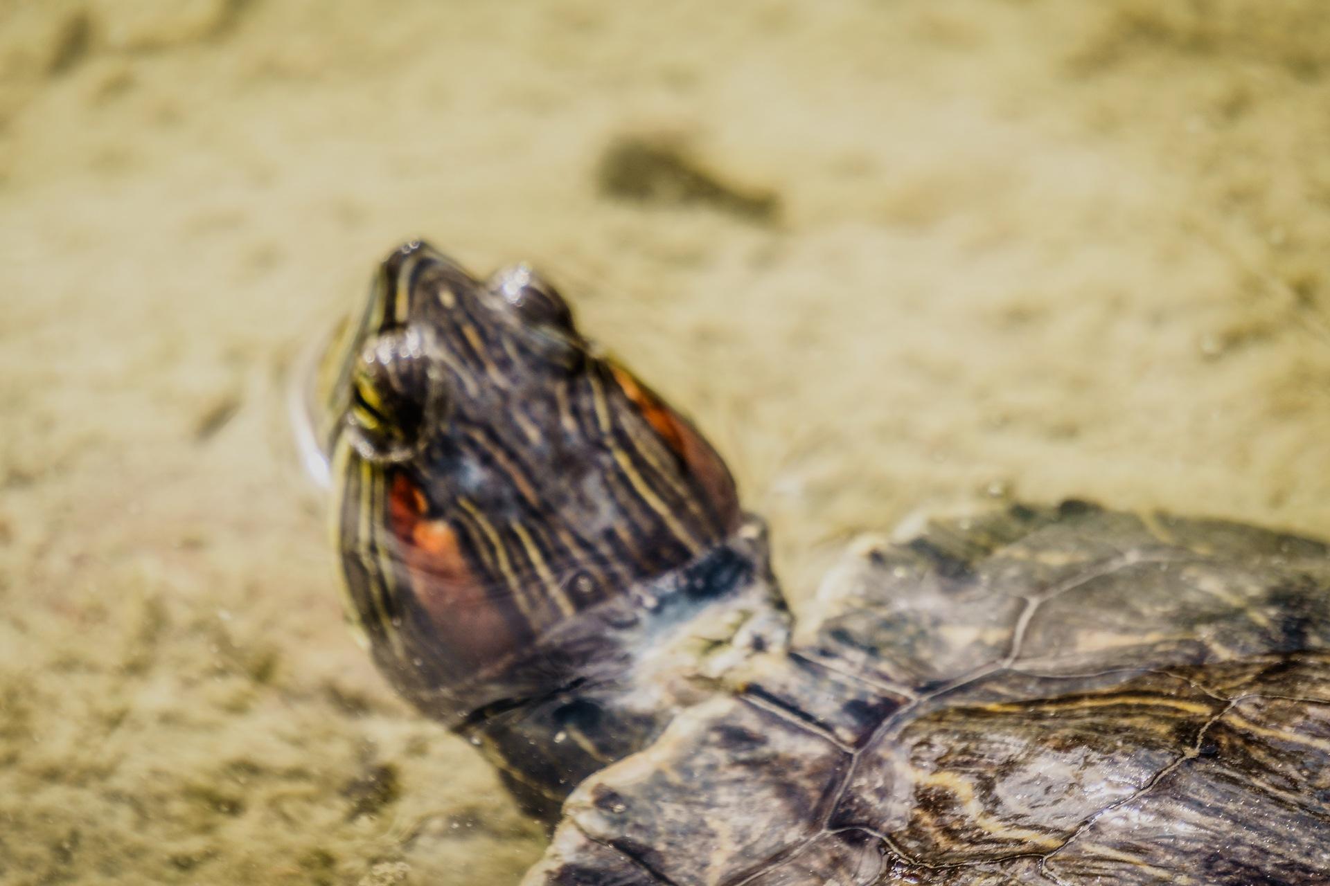 Turtle 9 by Venelin Todorov