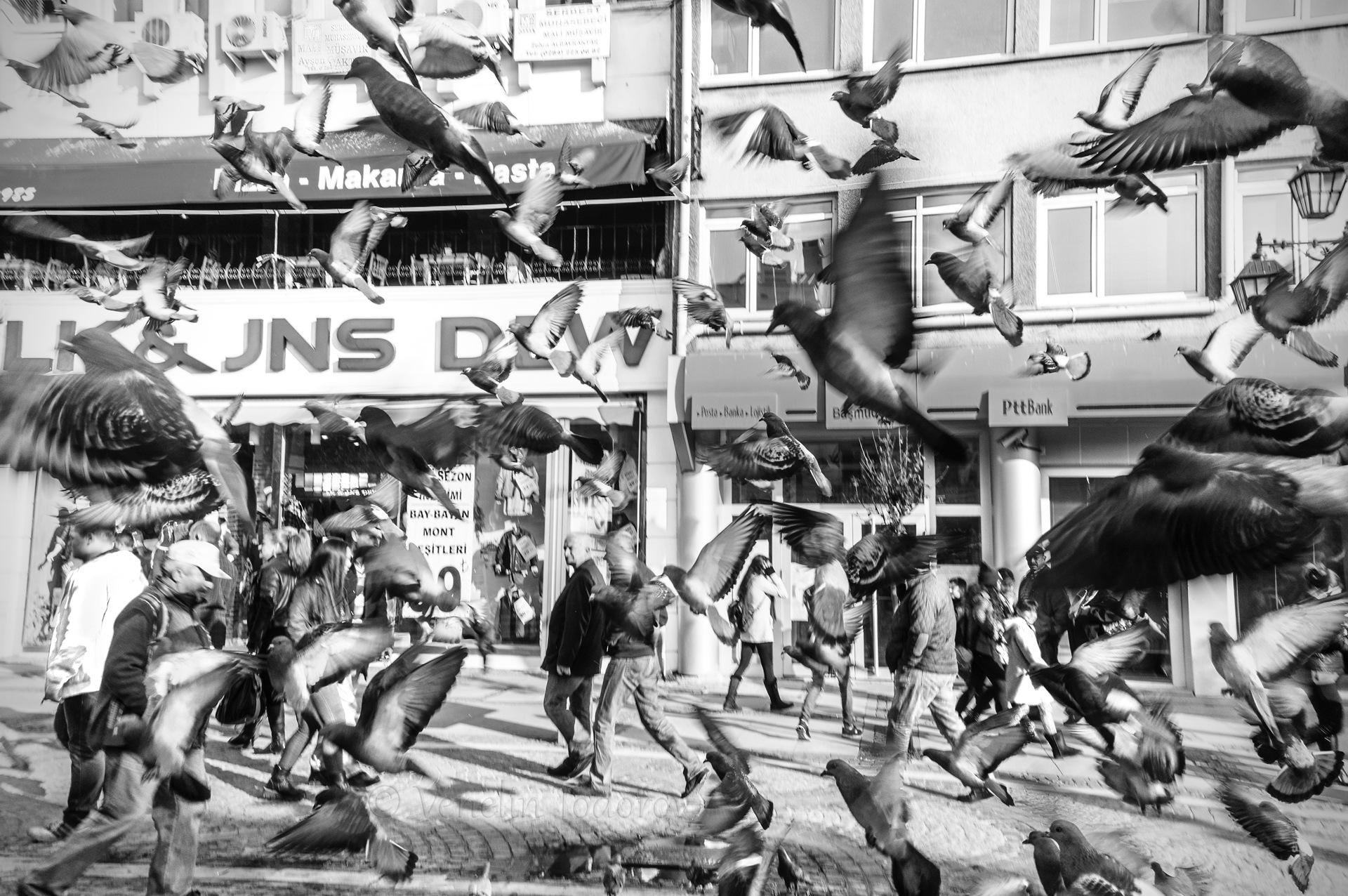 The birds by Venelin Todorov