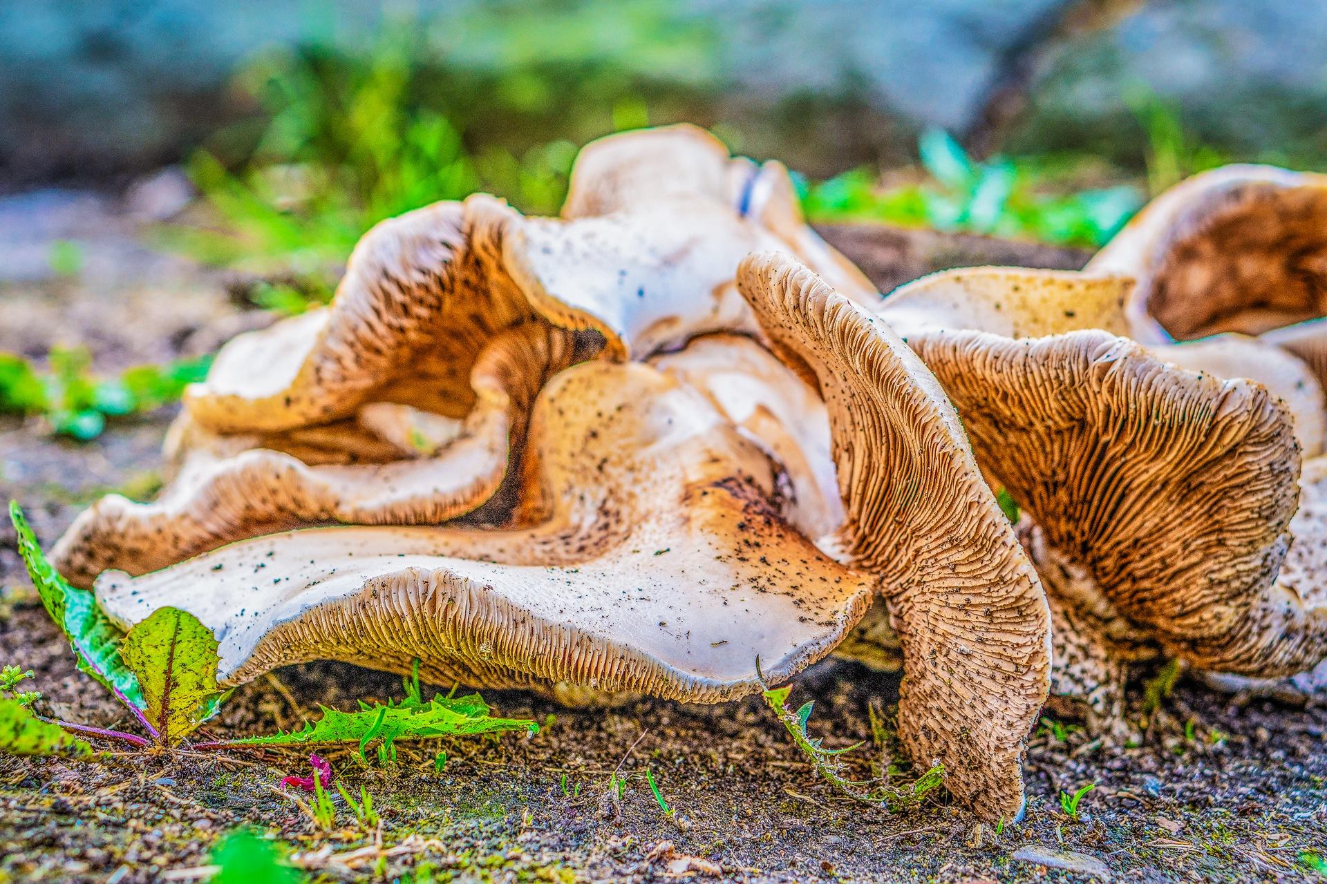 Wild mushrooms-3 by Venelin Todorov
