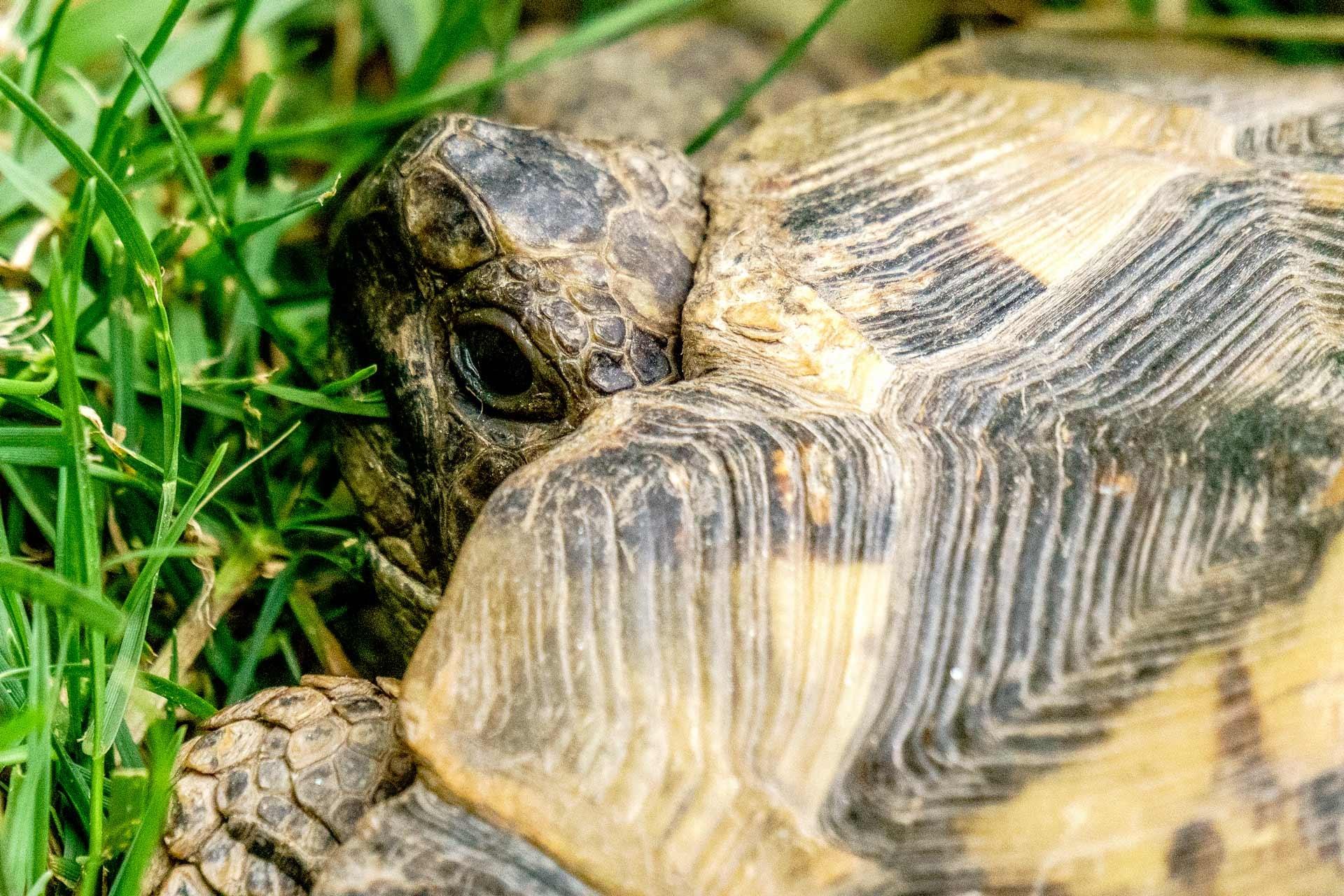 Turtle  by Venelin Todorov
