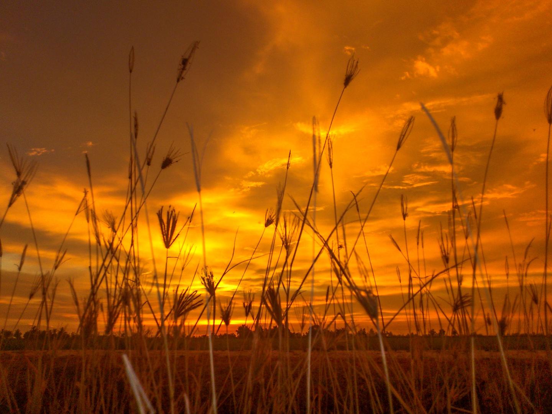 Sunset - grass - Handphone - S4 by klchin66