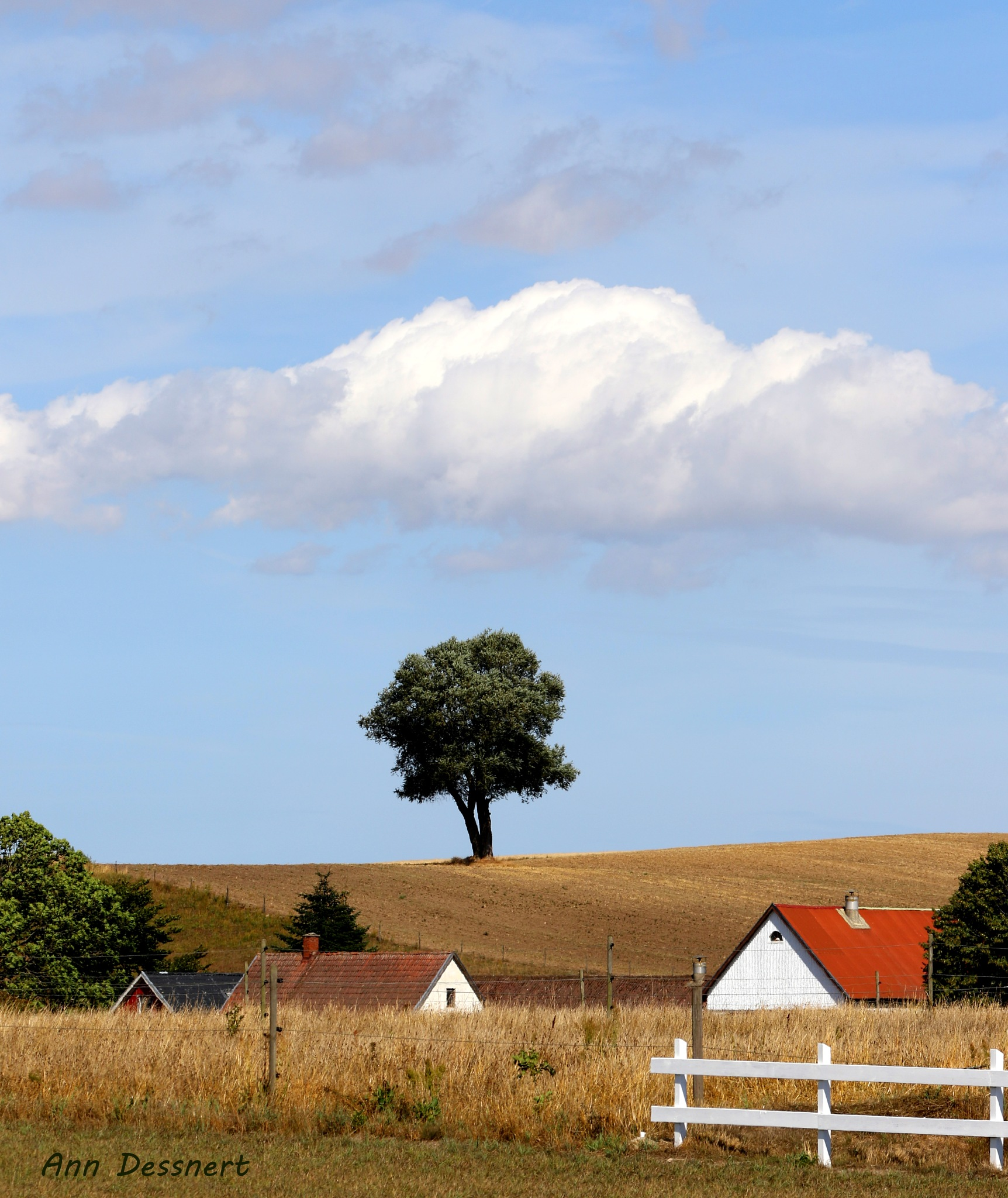 The lonely tree... by AnnDessnert