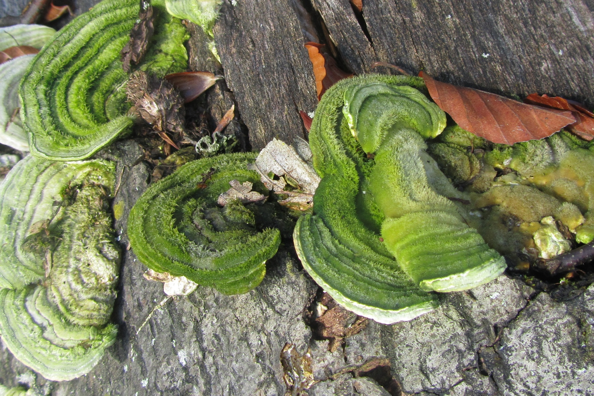 Fungus by AnnDessnert