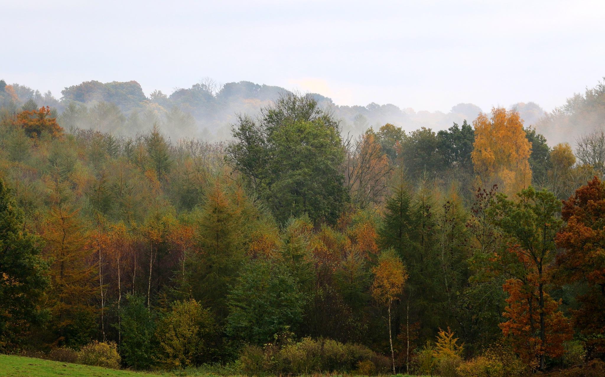 Fog amongst the trees by AnnDessnert