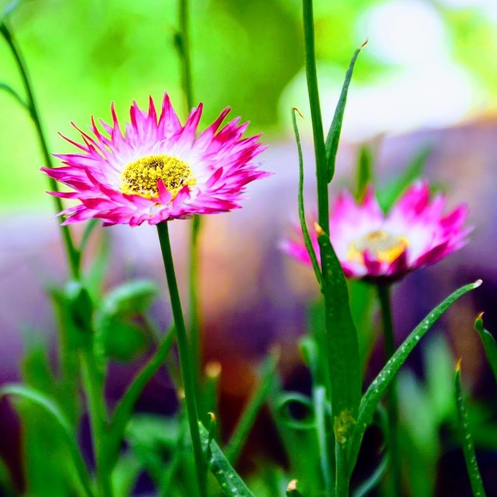Wild flower by JackBee