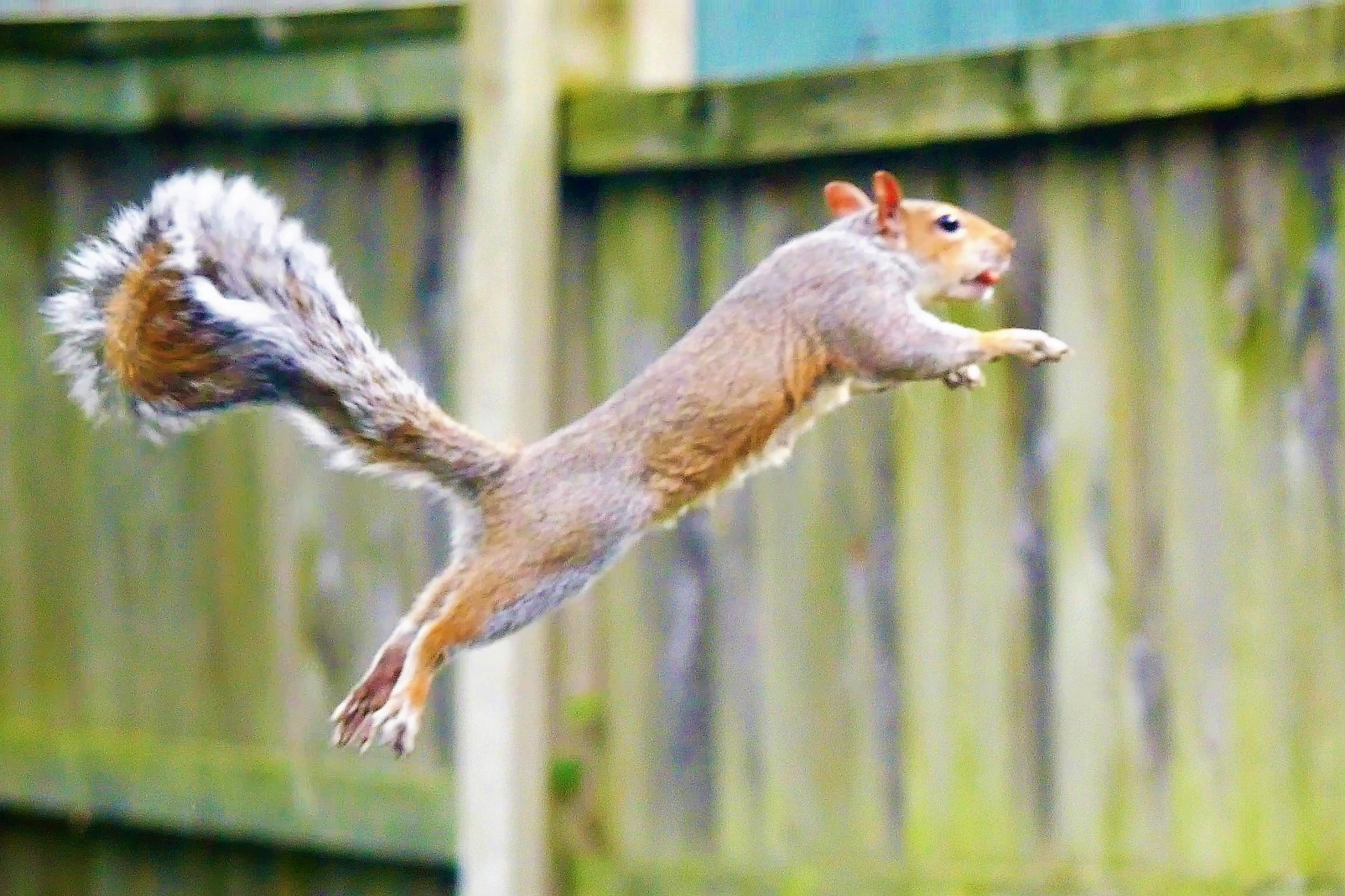 Nut airborne by AJ Yakstrangler Andy Jamieson