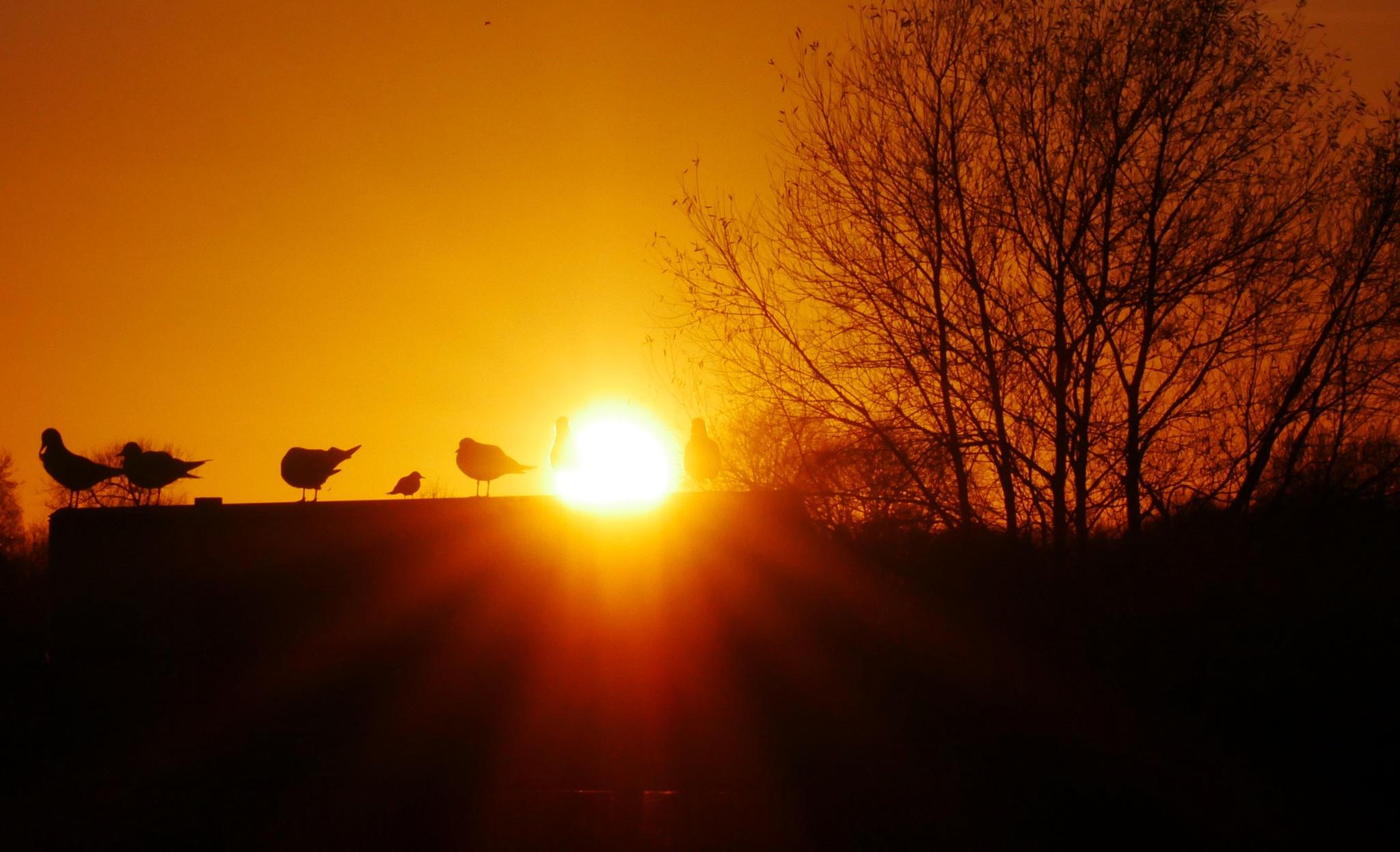 Seagull sunset by AJ Yakstrangler Andy Jamieson