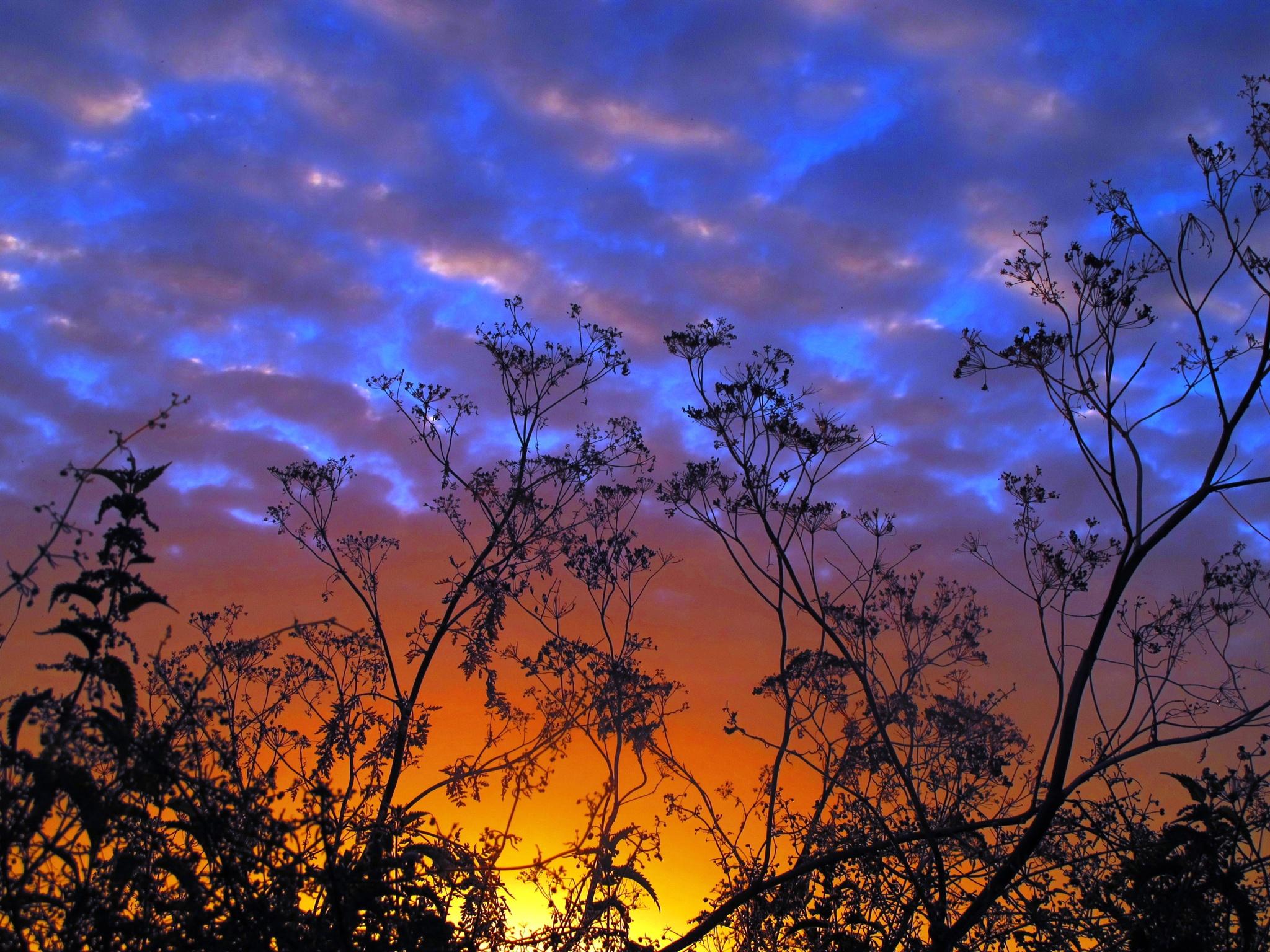 Sunset twigs by AJ Yakstrangler Andy Jamieson