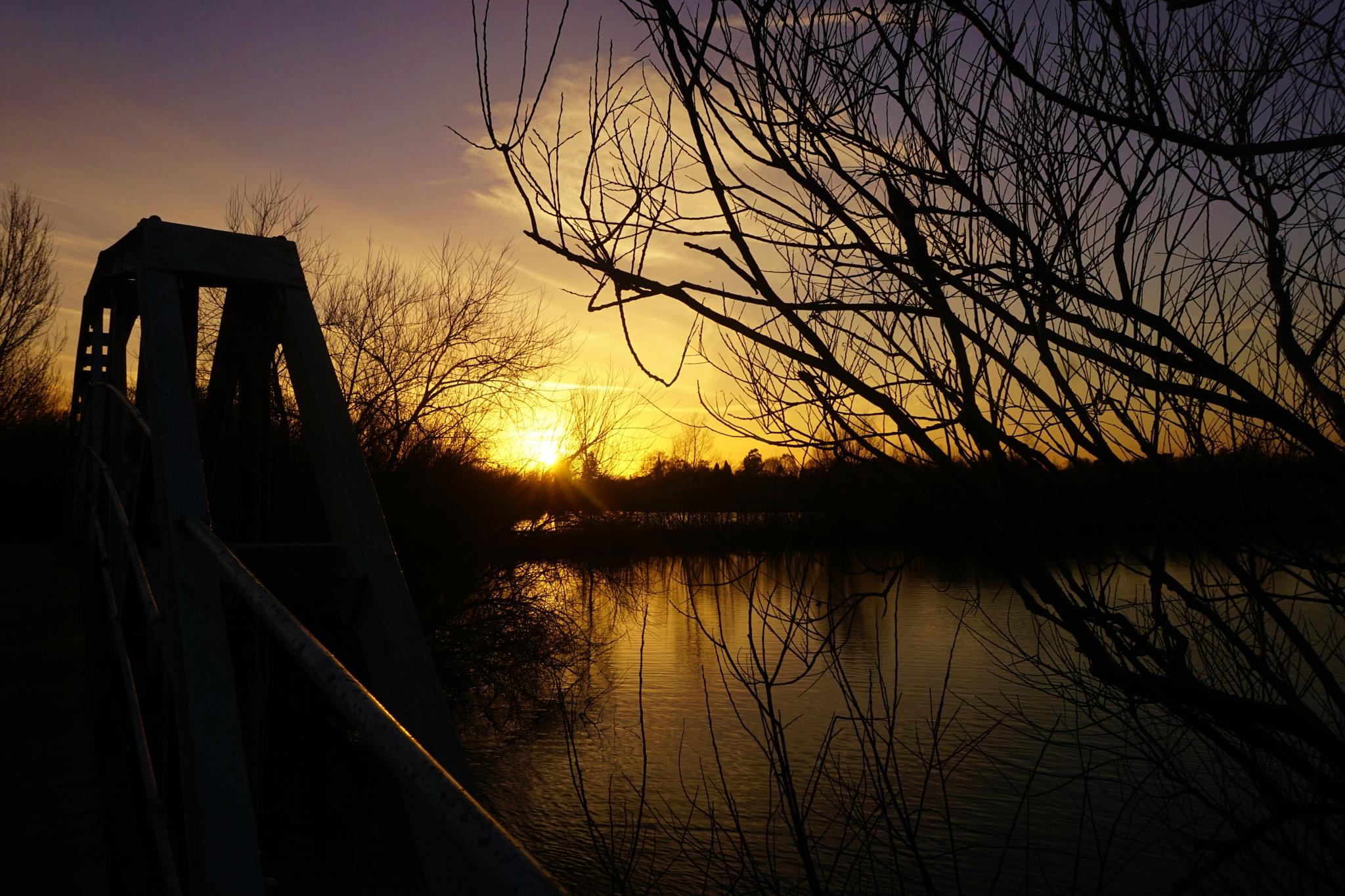 Bridge and tree sunset by AJ Yakstrangler Andy Jamieson