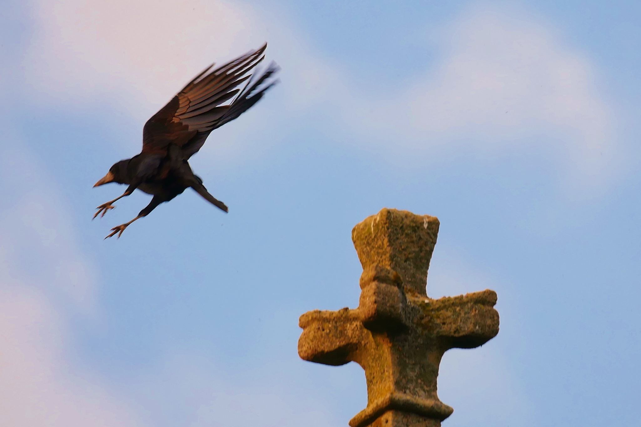 Photo in Nature #west leake #crow #bif #bird in flight #church cross