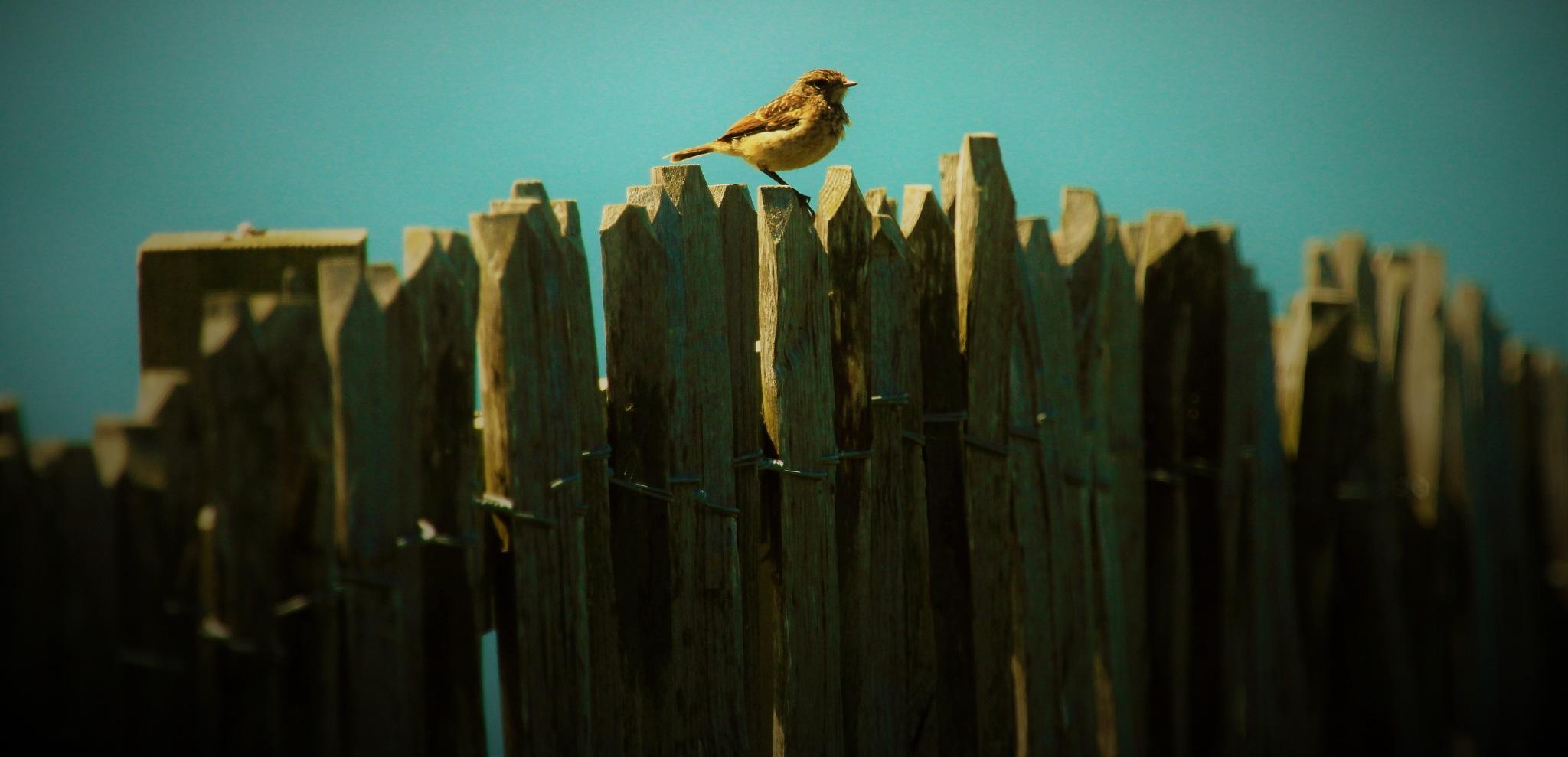 My Perch by AJ Yakstrangler Andy Jamieson