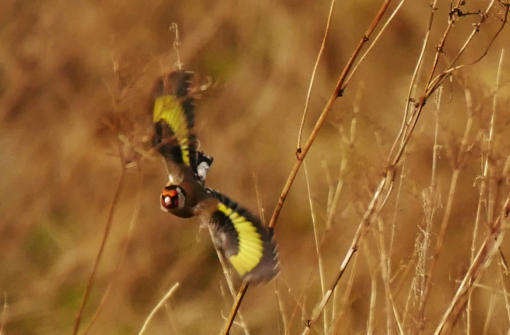 Twig flight by AJ Yakstrangler Andy Jamieson