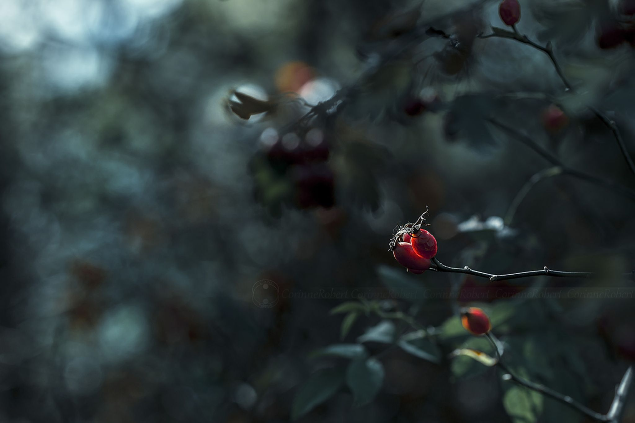 Ambiance d'automne by chewycoco7
