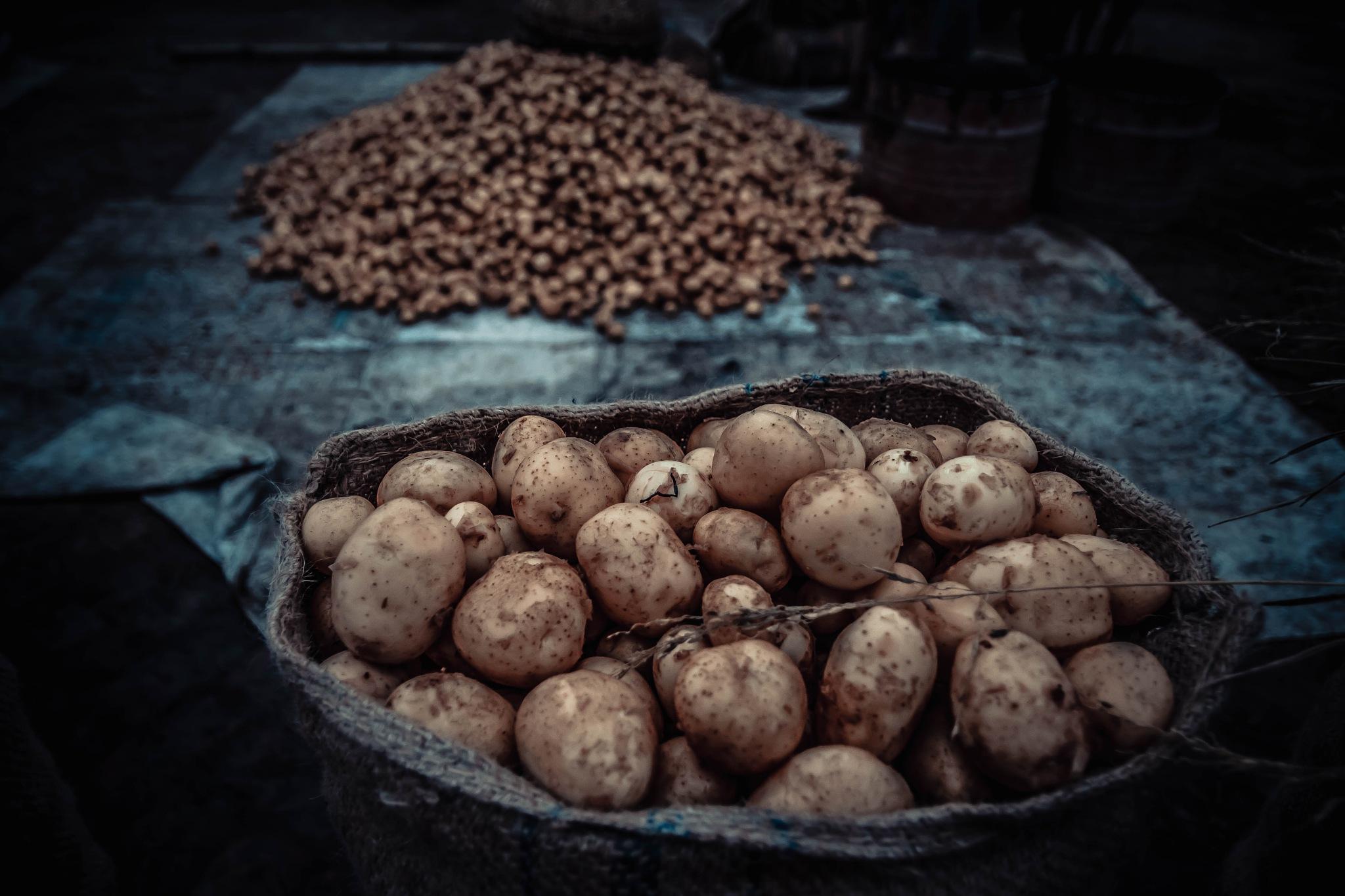 Potato by Mursadur Rahman Akash