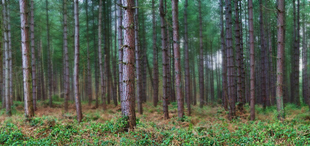 Forest by hammarbytp