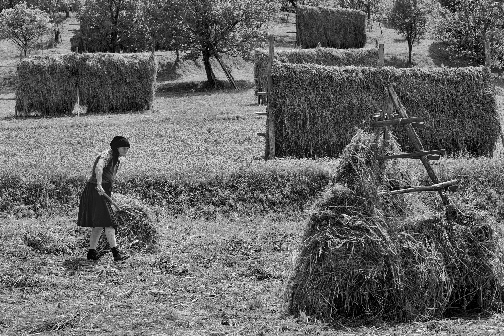 Photo in Rural #old_woman #hay #rural #black_and_white