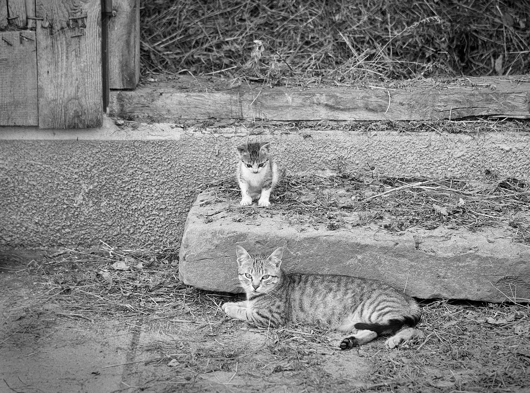 Photo in Animal #cats #mother #baby #animals