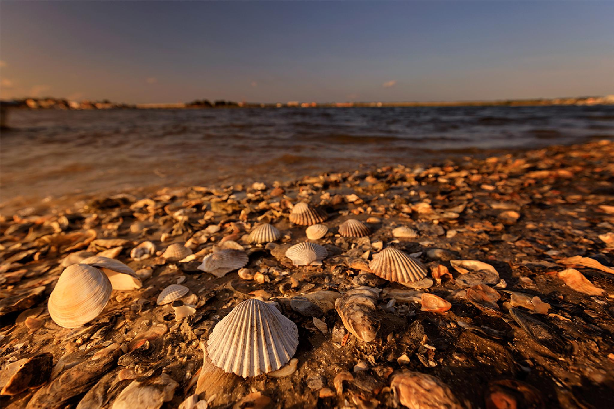 shells by Mirela Savu
