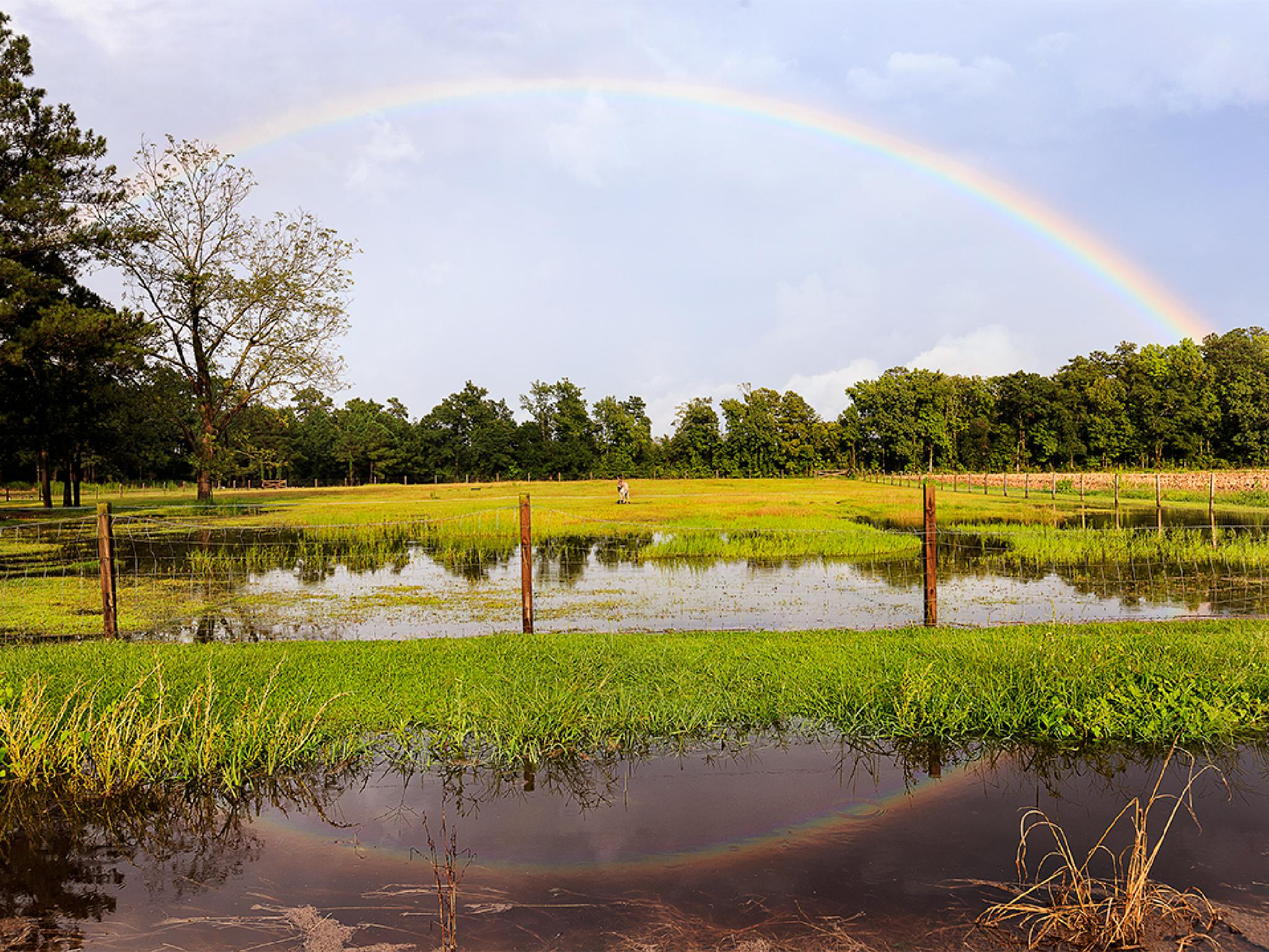 Rainbow reflection  by Mirela Savu