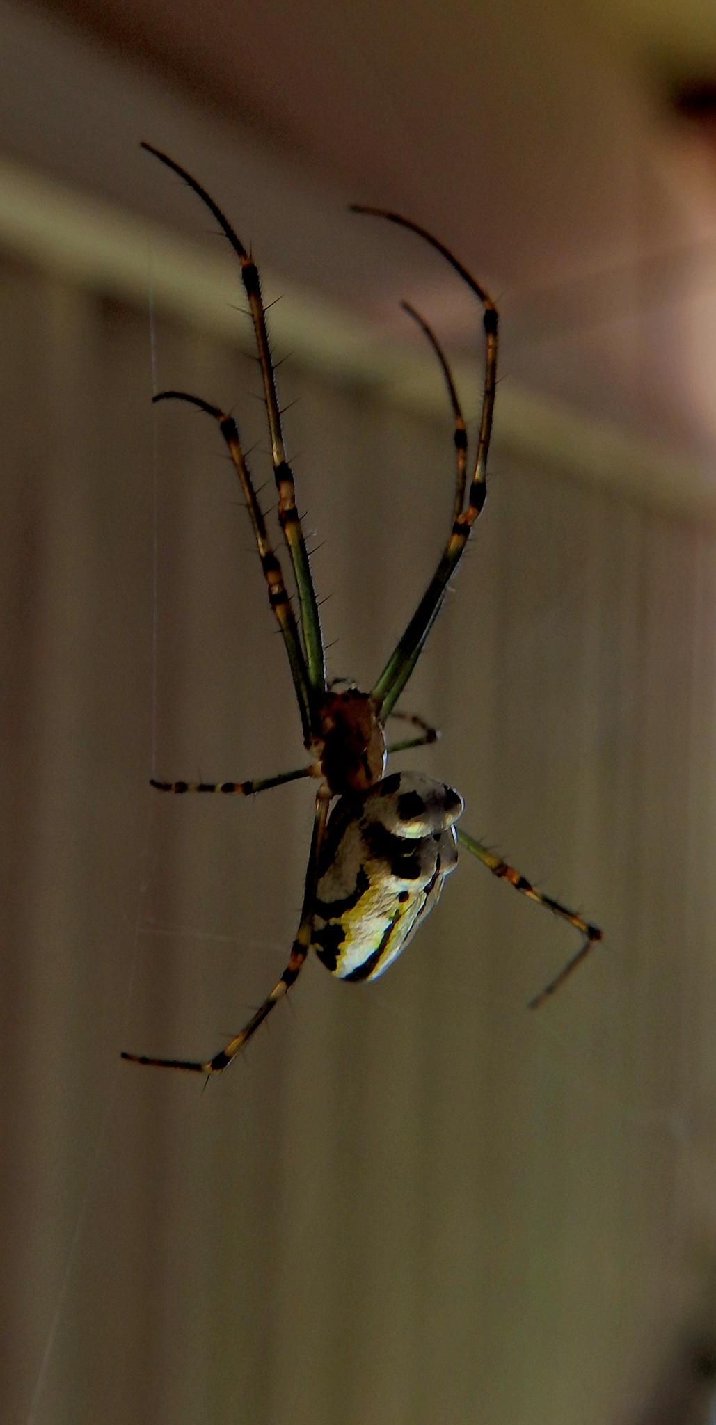 spider metallic by hockeymask1