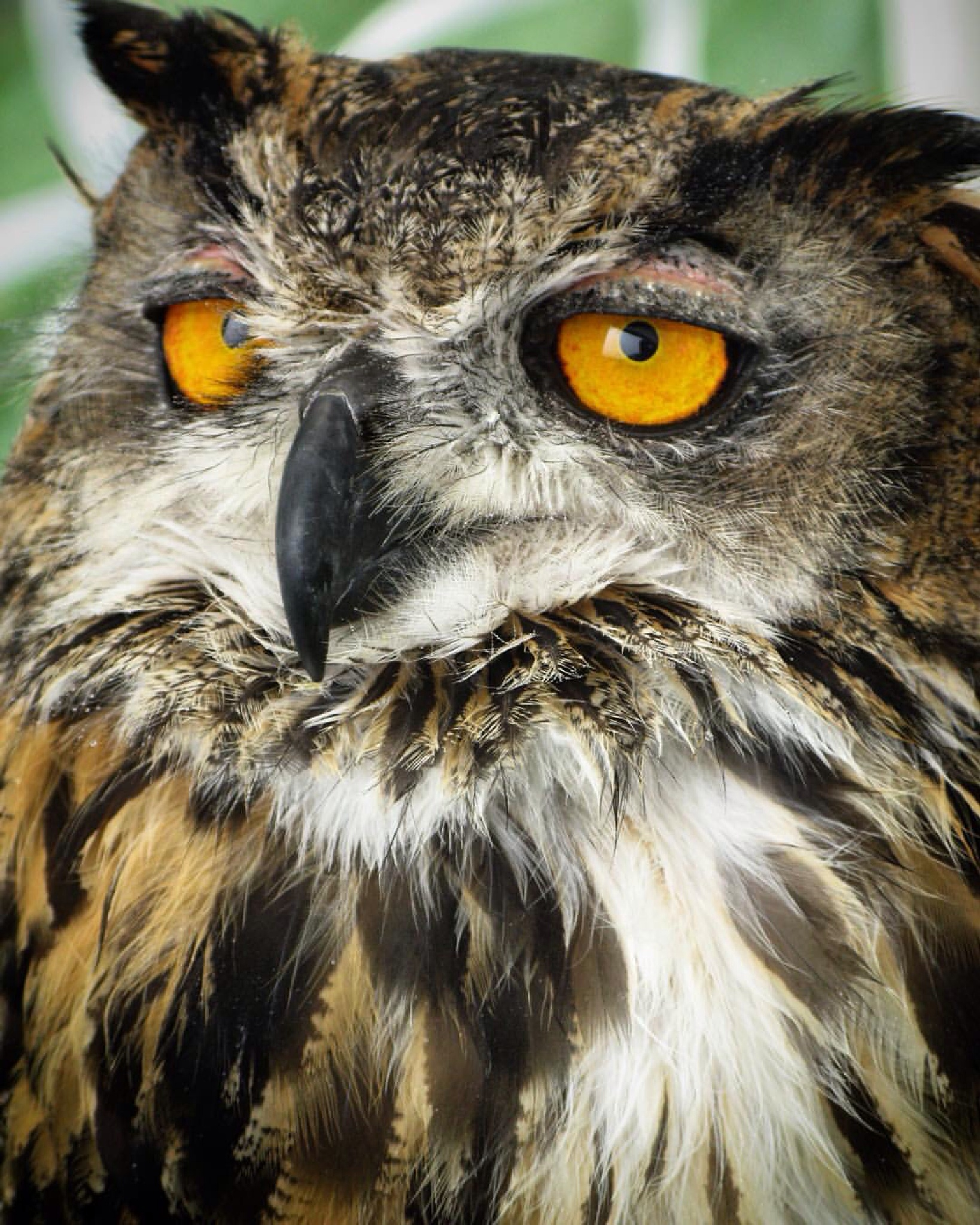 Owl by Lynnette Bolton