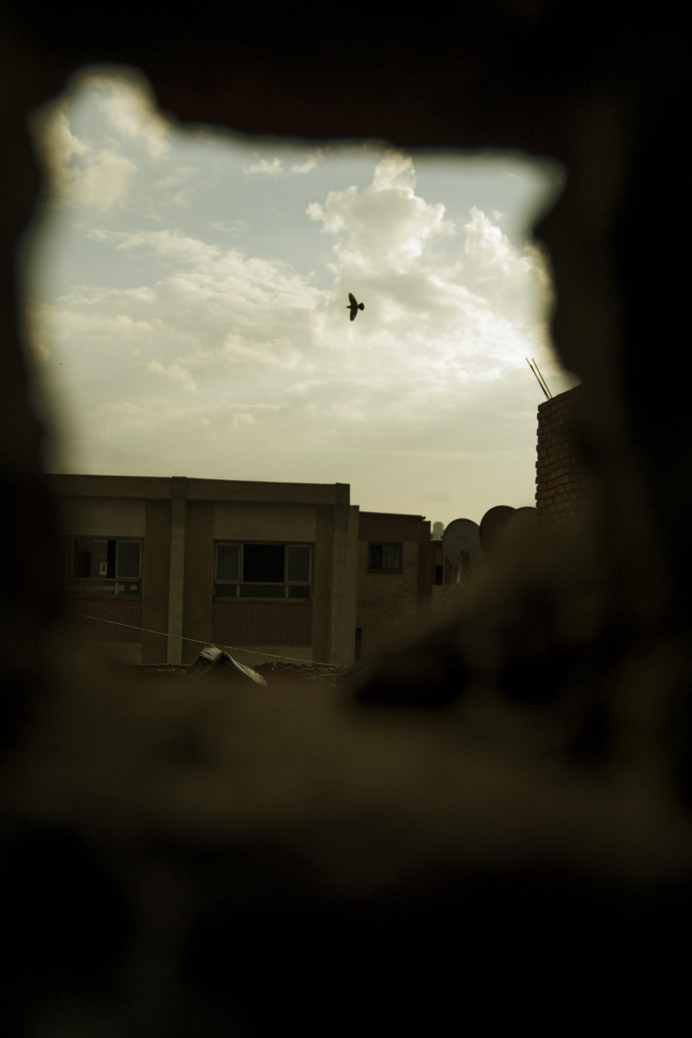freedome  by Marwan Mahmad Hmeda