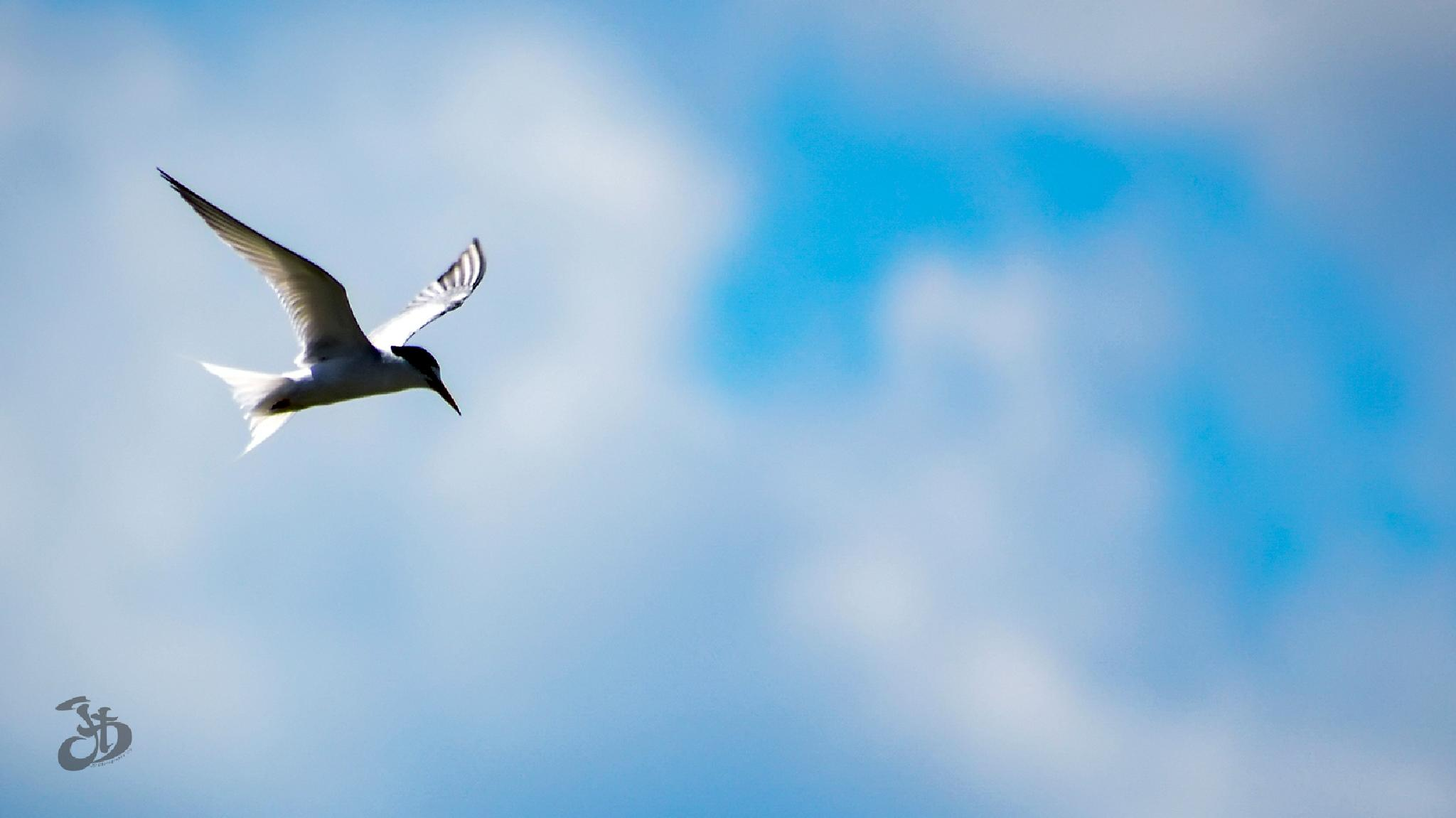 FLYING IN THE SKY by Jukhie Damak