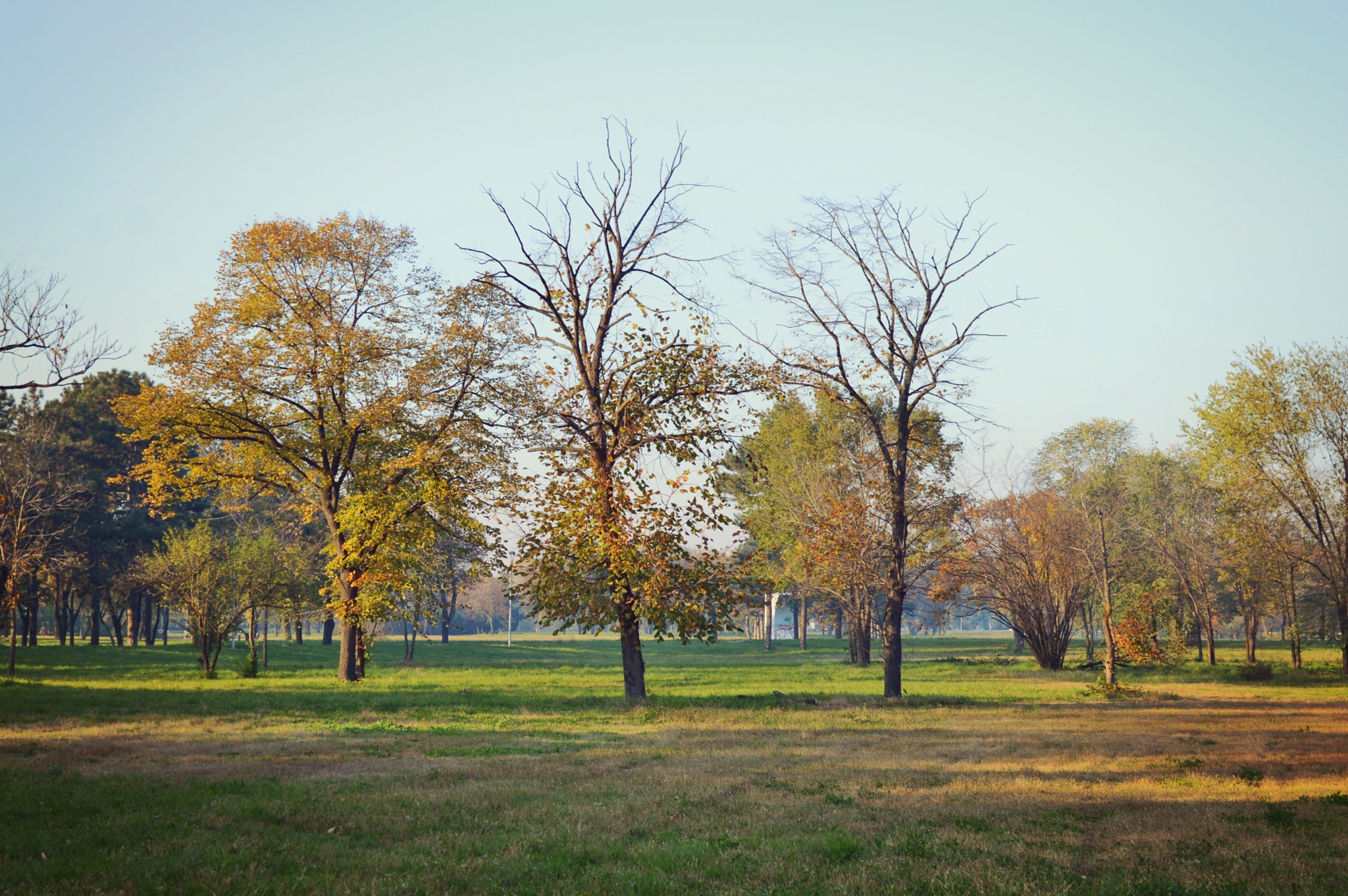 Autumn  by ivanatrifkovic