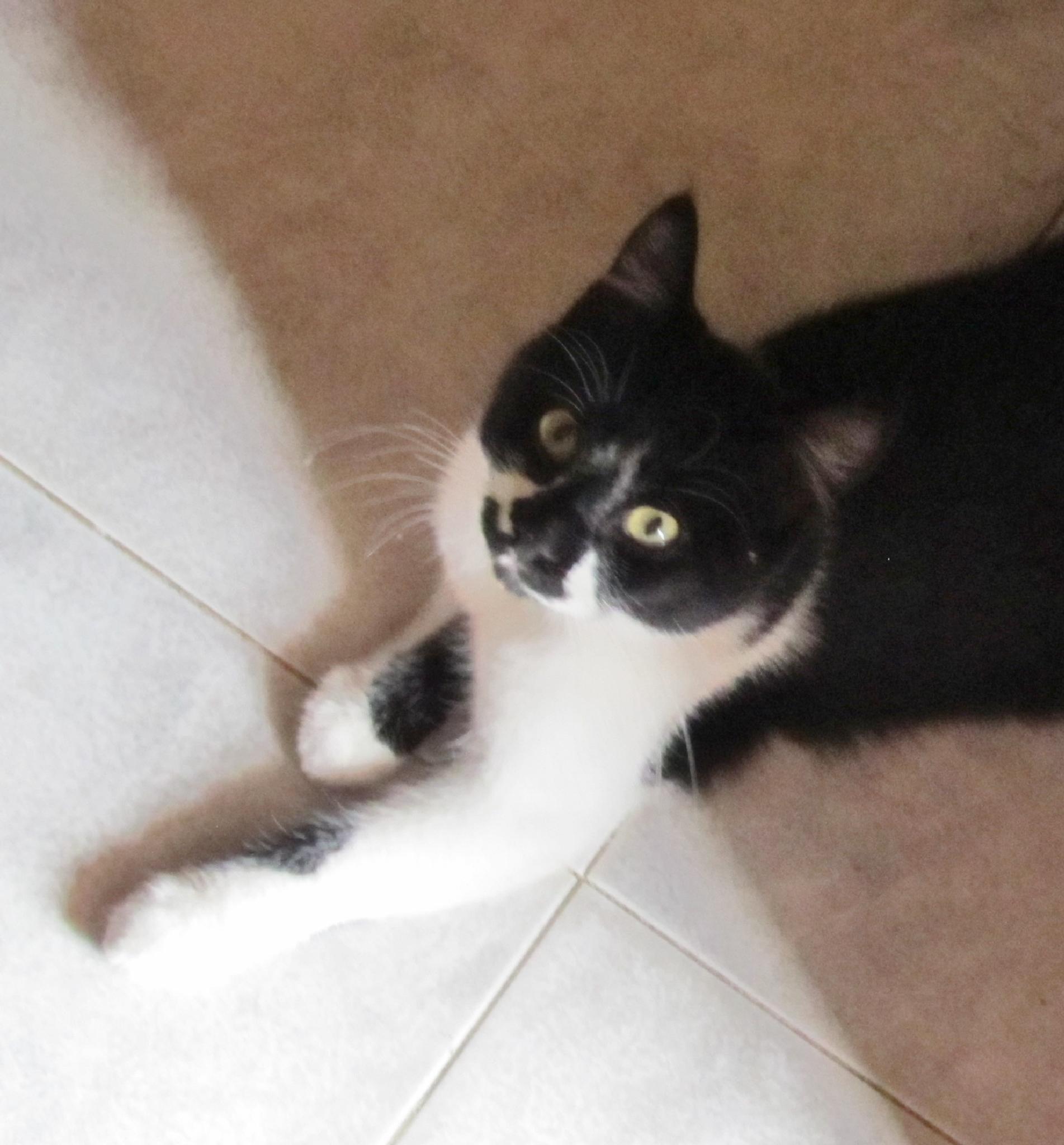 Yin n Yang kitty~ by tracybertapelle